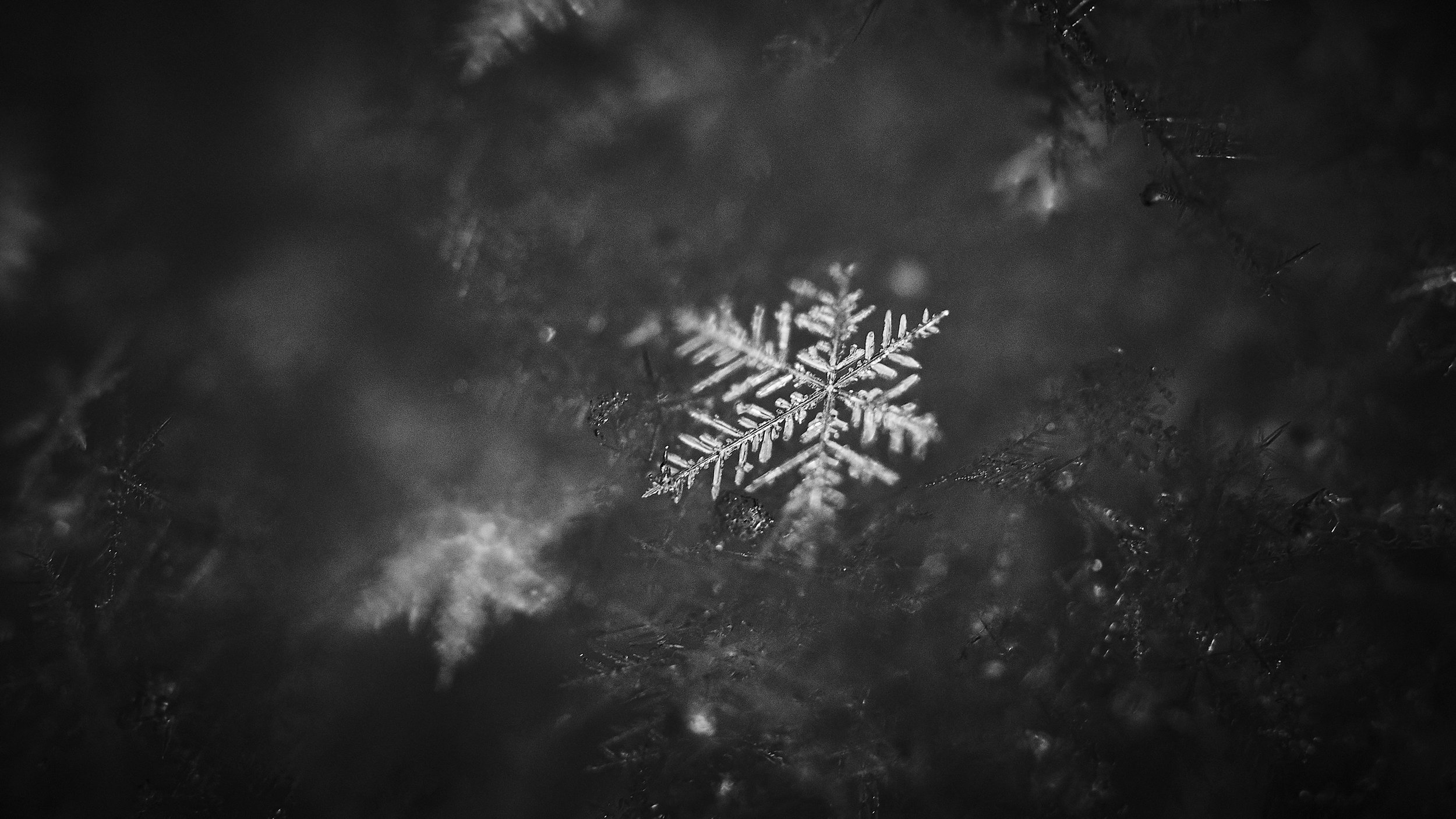 snow-macro_feb2019_04.jpg