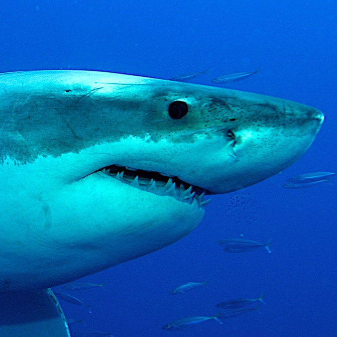 SharkBanner2.jpg