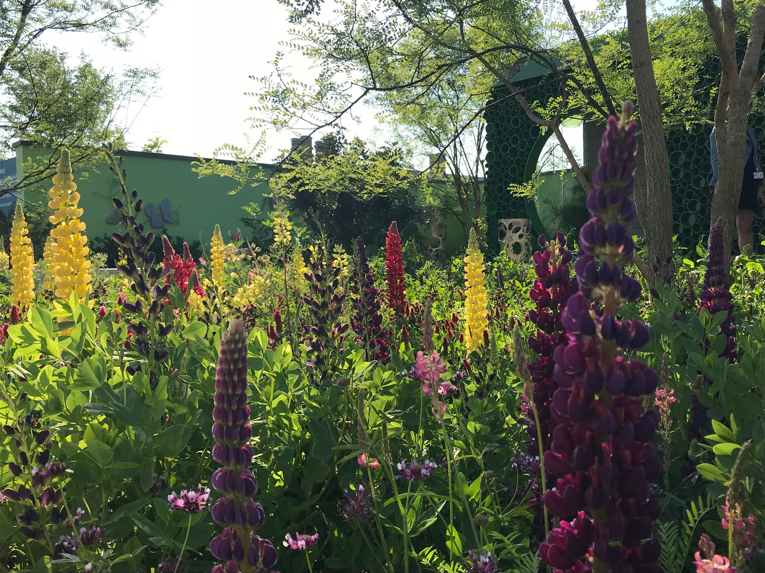 The Seedlip Garden used clashing purples, yellows and reds