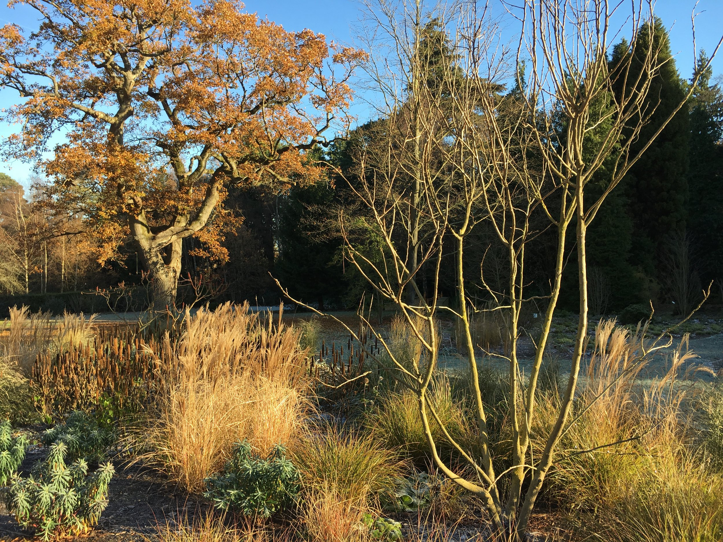 Euphorbia characias, Miscanthus malepartus and Agastache rugosa 'Liquorice White' look stunning in the autumn light