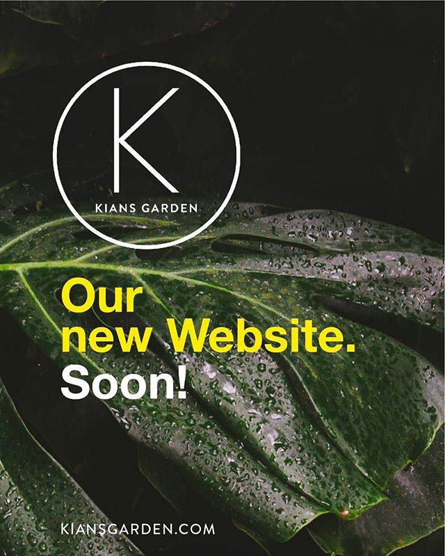 We are totally excited: our new website is coming soon! #new #website #comingsoon #kiansgarden #happy #excited #flowers #plants #decoration #berlin #munich 🌿🌱