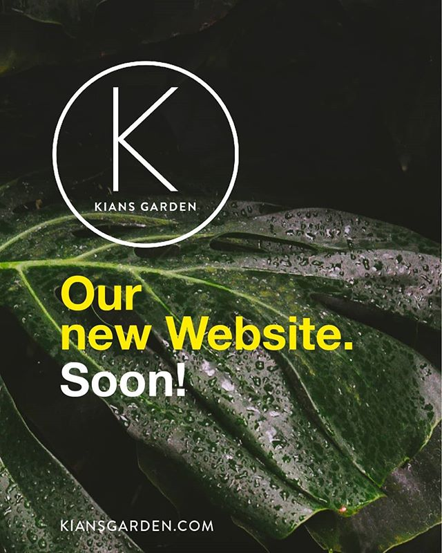 We are totally excited: our new website is coming soon! #kiansgarden #flowercatering #newwebsite #flowers#flowershop #plants #decoration #berlin #munich