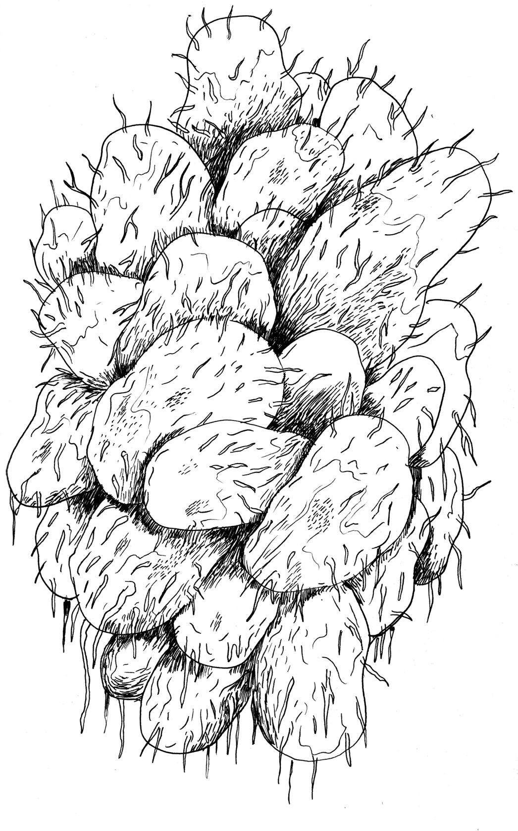 kartoffel.jpeg
