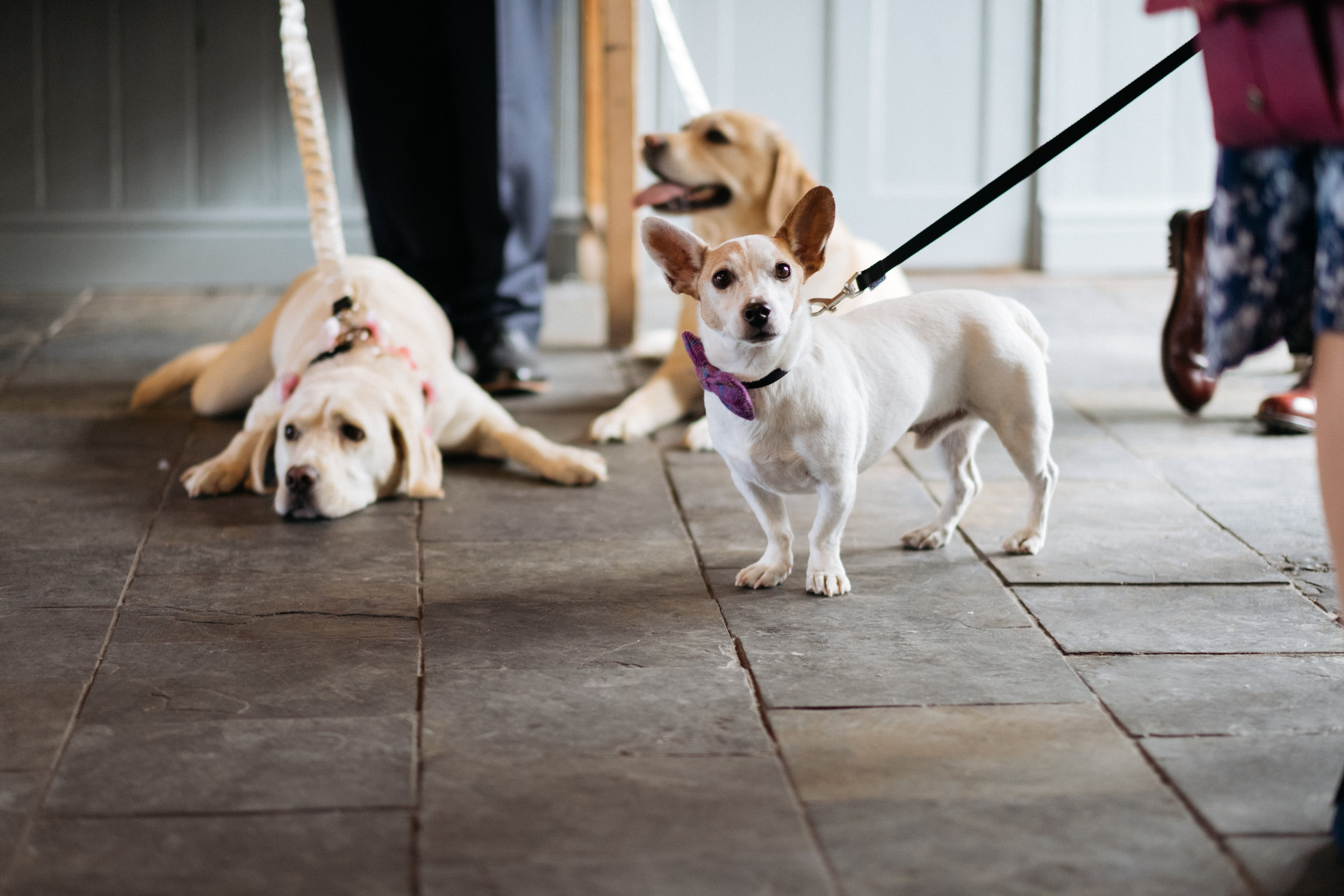 Dogs at East Quay wedding