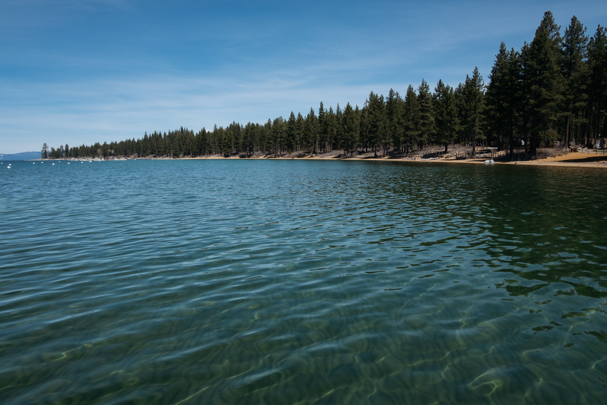 Trees lining Lake Tahoe shoreline