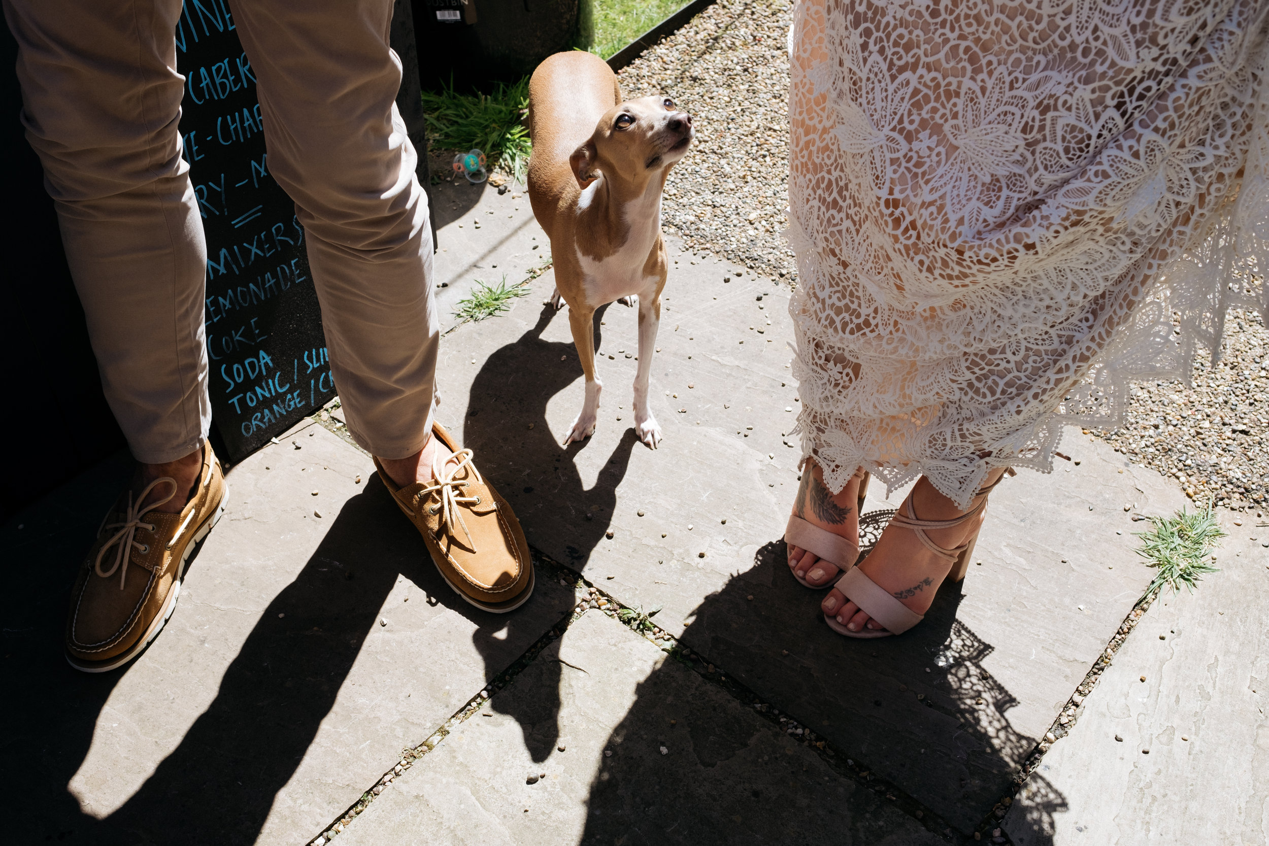 "Italian greyhound ""Iggy"" staring up at bride and groom"
