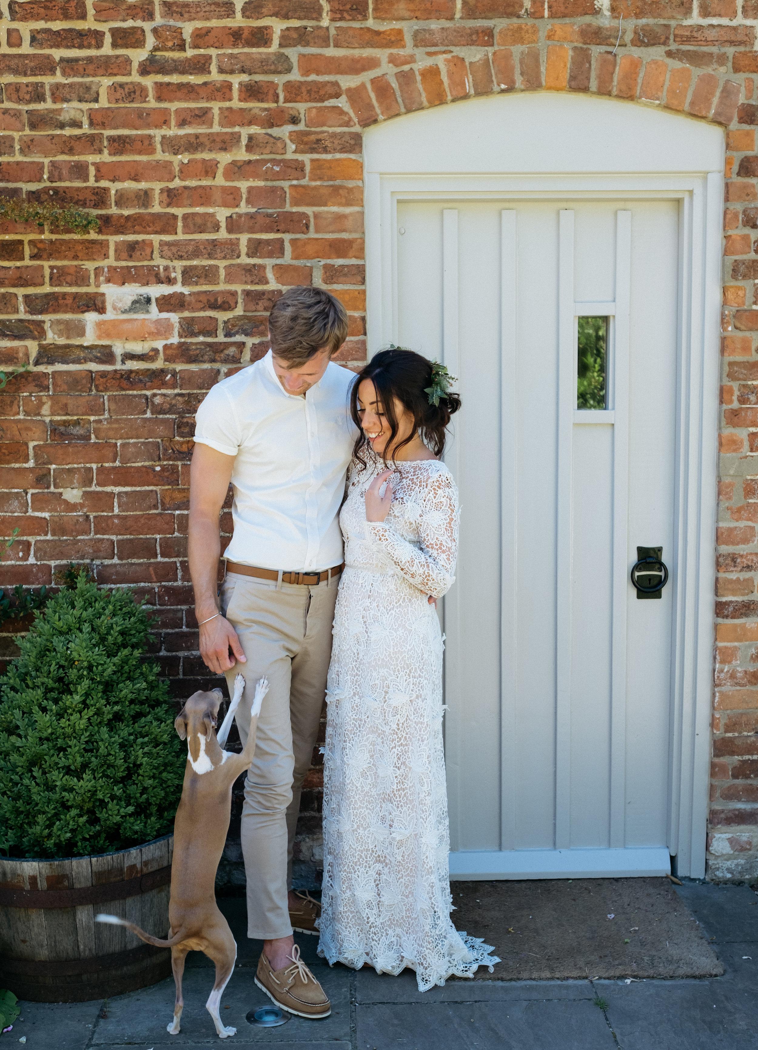 Italian greyhound with bride and groom