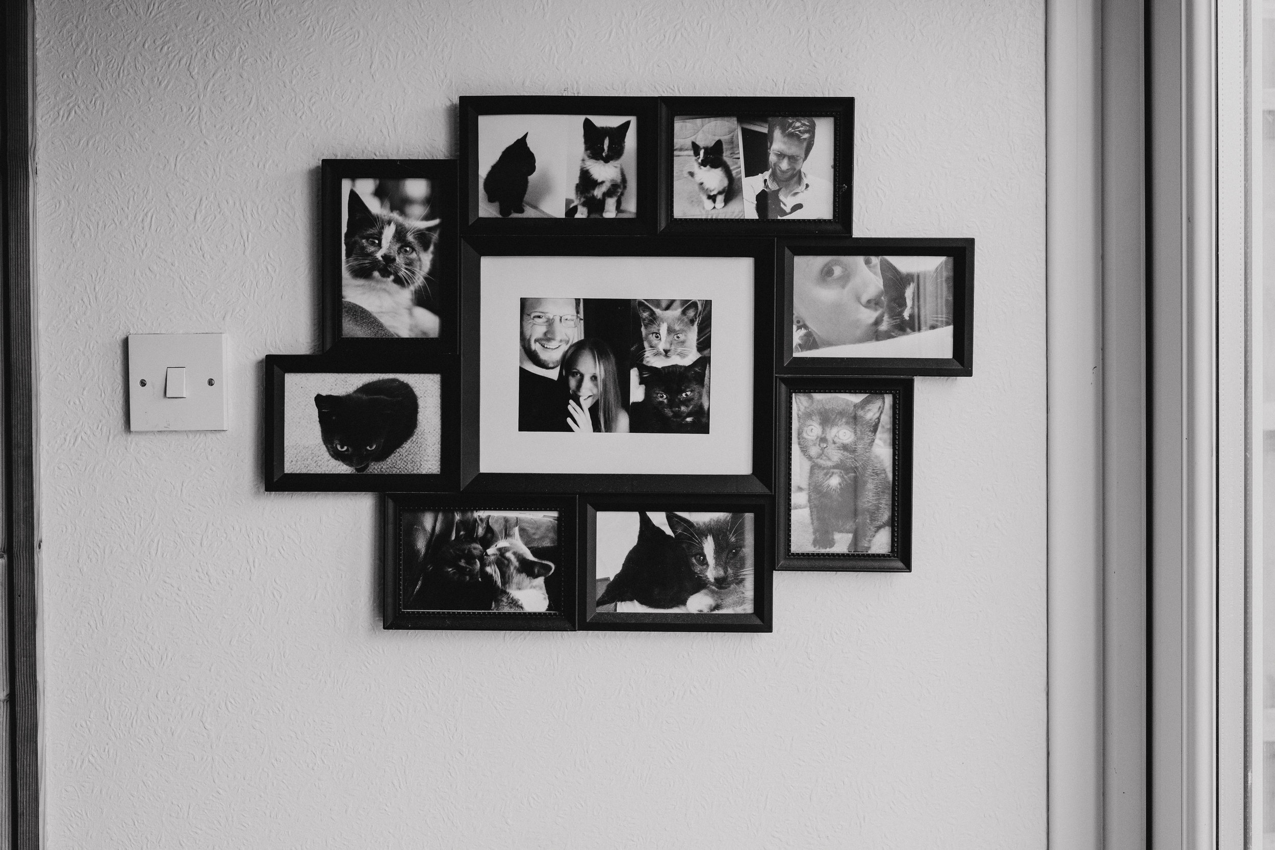 Bride and groom and their cats - photo frame on the wall