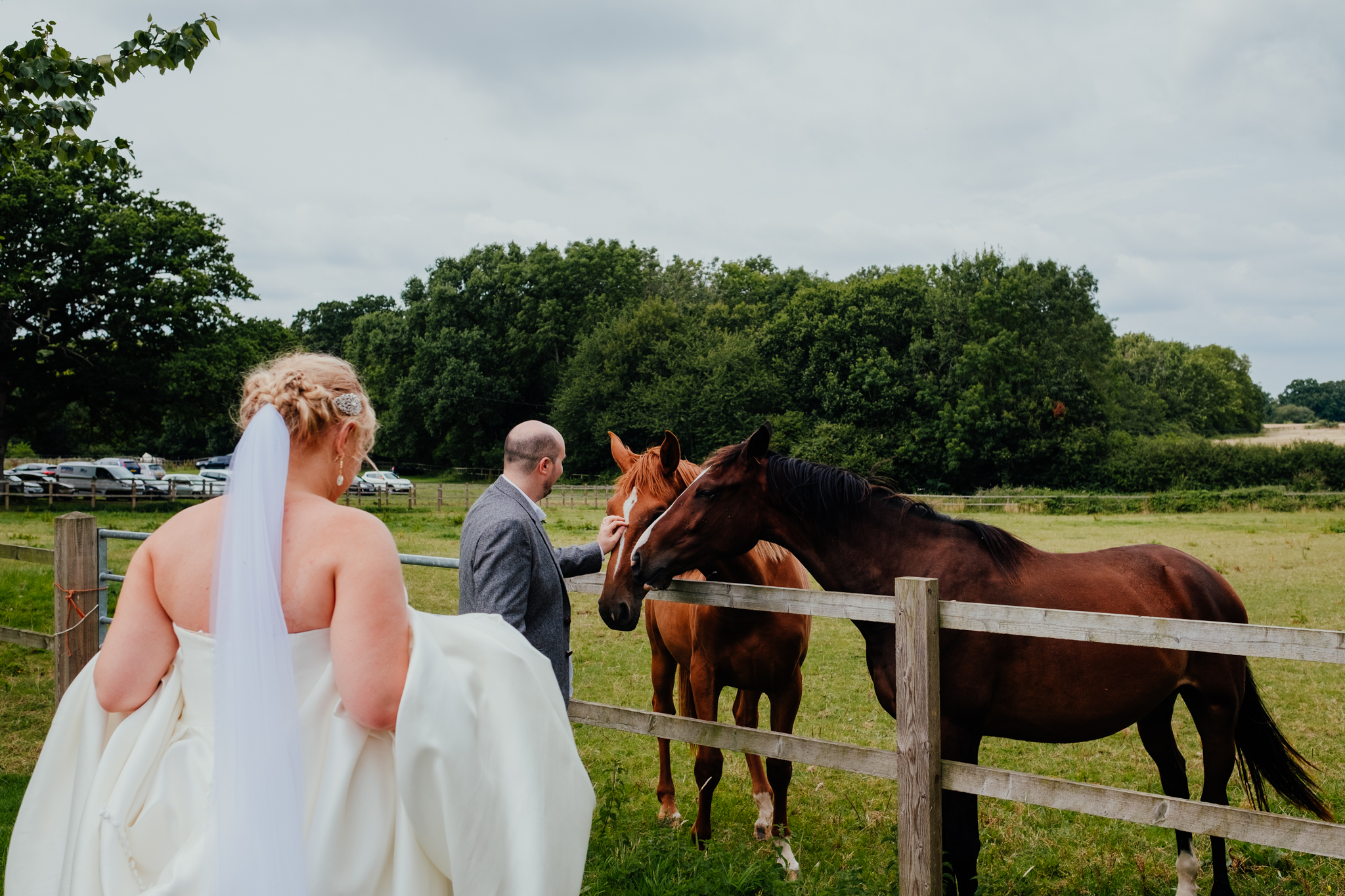 Bride and groom say hello to horses at Rumbolds Farm