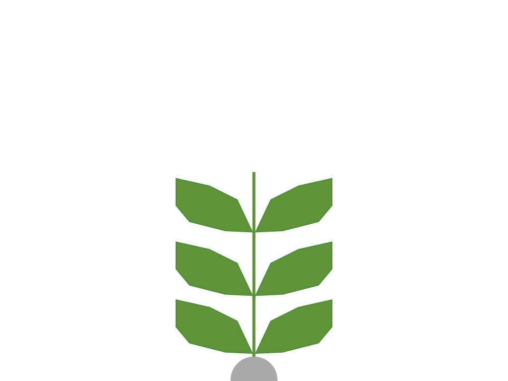 Seed 2nd grow.001.jpeg