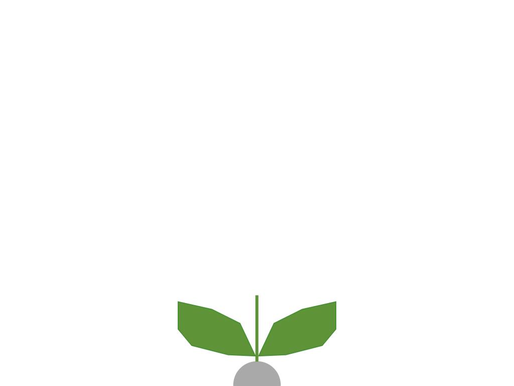 Seed 1st grow.001.jpeg