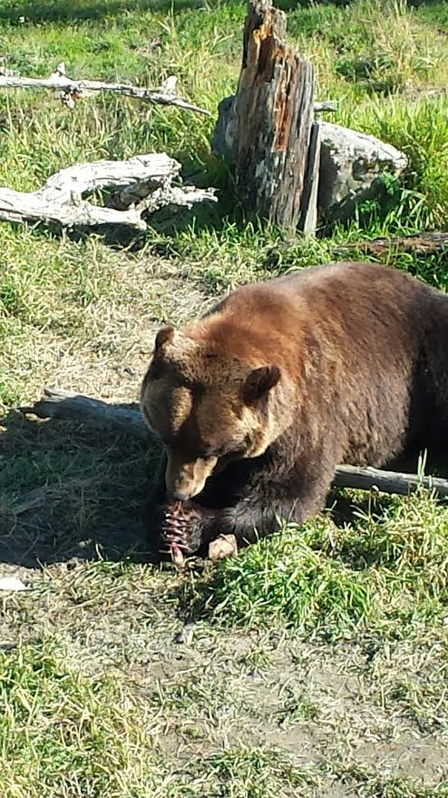 alaska_bear_conservation_center_alaska_travel.jpg