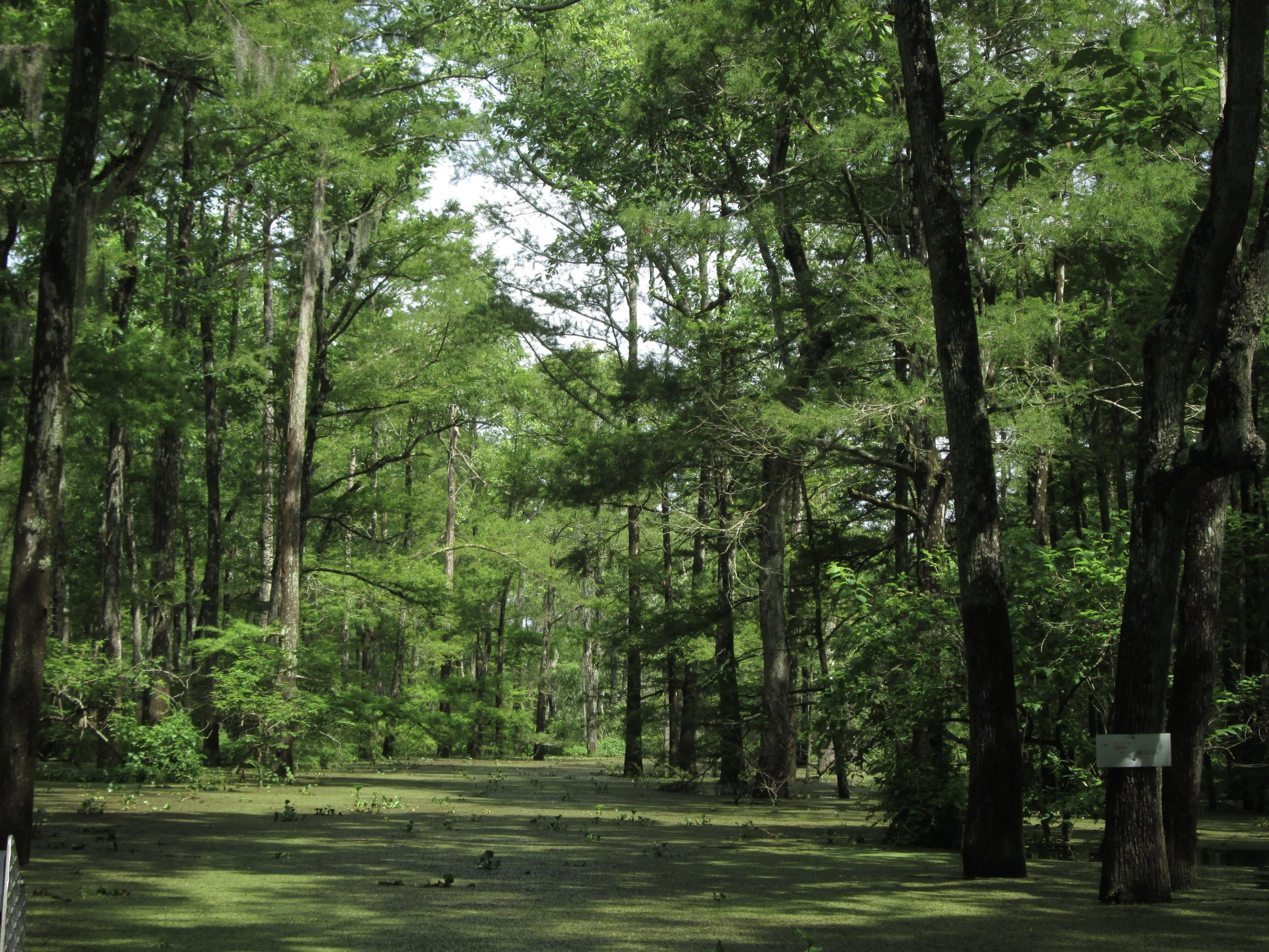 Atchafalaya Basin Bayou