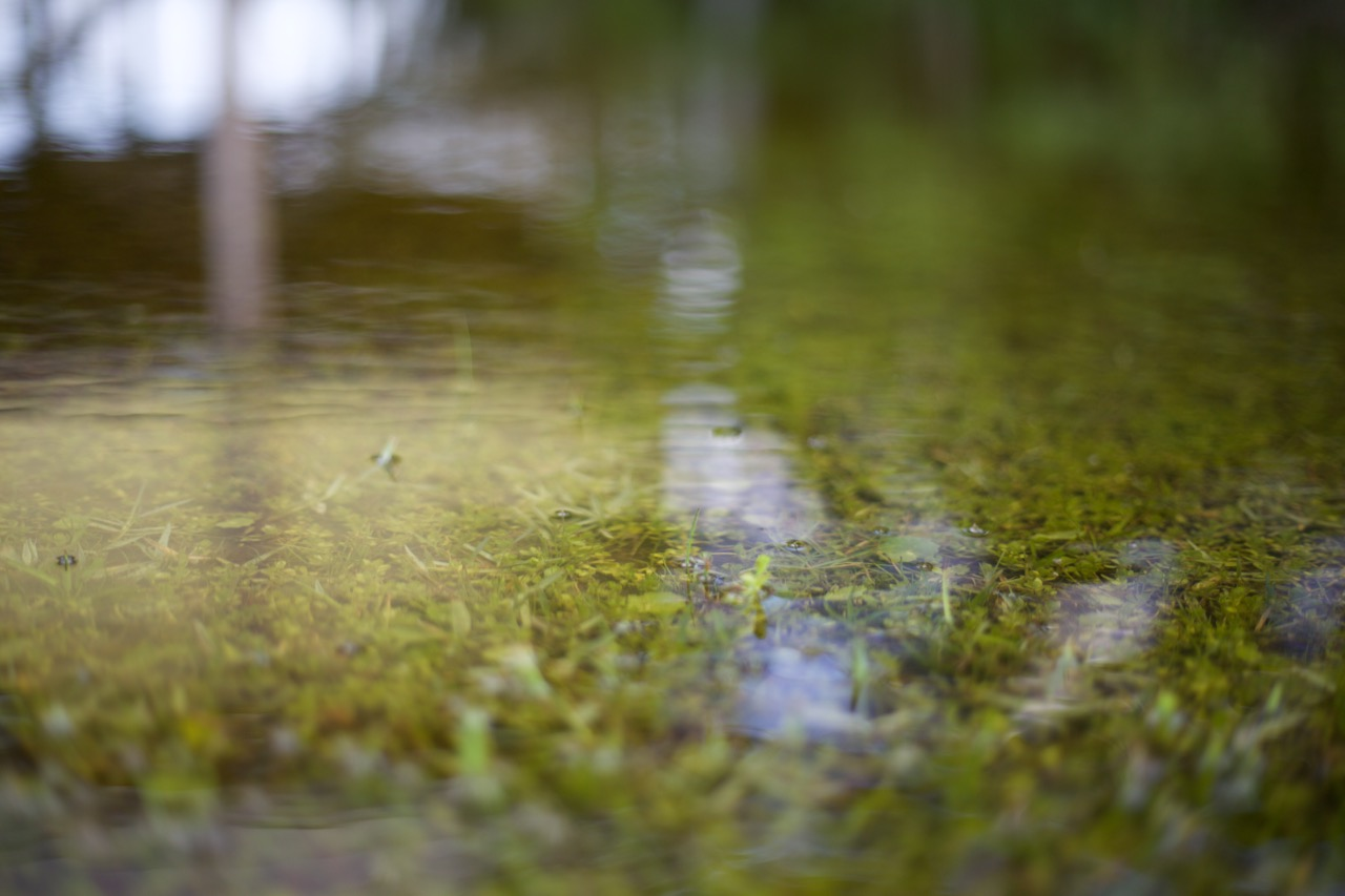 Puddles exist everywhere and carry the danger of rot and mosquitoes