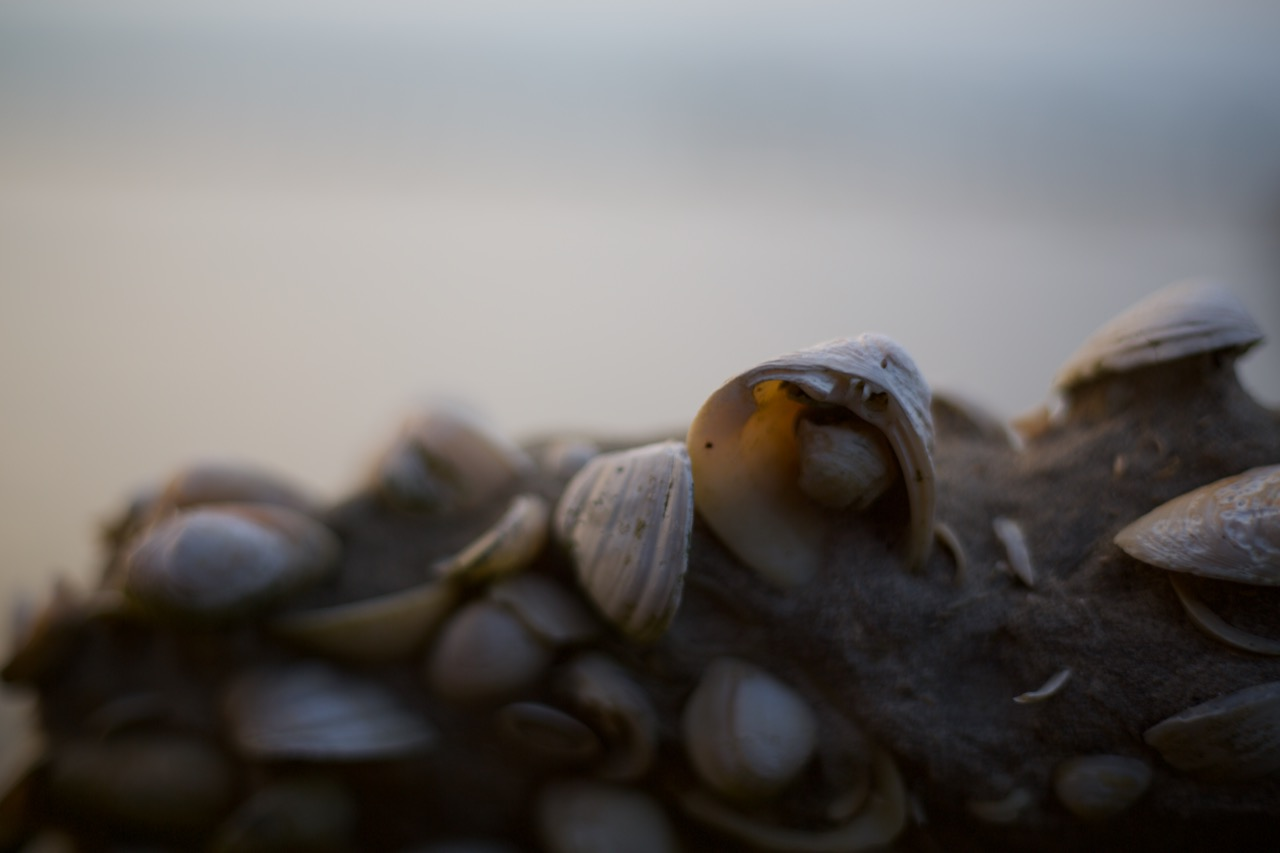 Seashells are often incorporated into the cement, reflecting the merge of ocean with civilization here in Louisiana