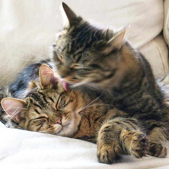 yup, it's #caturday.
