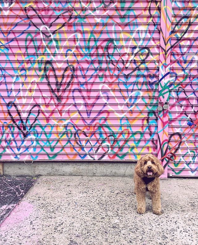 💙🐶💖🐶💜 . . . . . @bentleythechewbacca @i.am.pei #tbt #itsbeenawhile #hi #cockapoo #cockapoopuppy #LES #chinatown #eastvillage #puppiesofinstagram #puppy #purple #pink #streetart #grafitti #newyork #newyorkcity #nyc #winter #towarmerdays #dogsitting #dogvacay #dogvacation #throwbackthursday #throwback