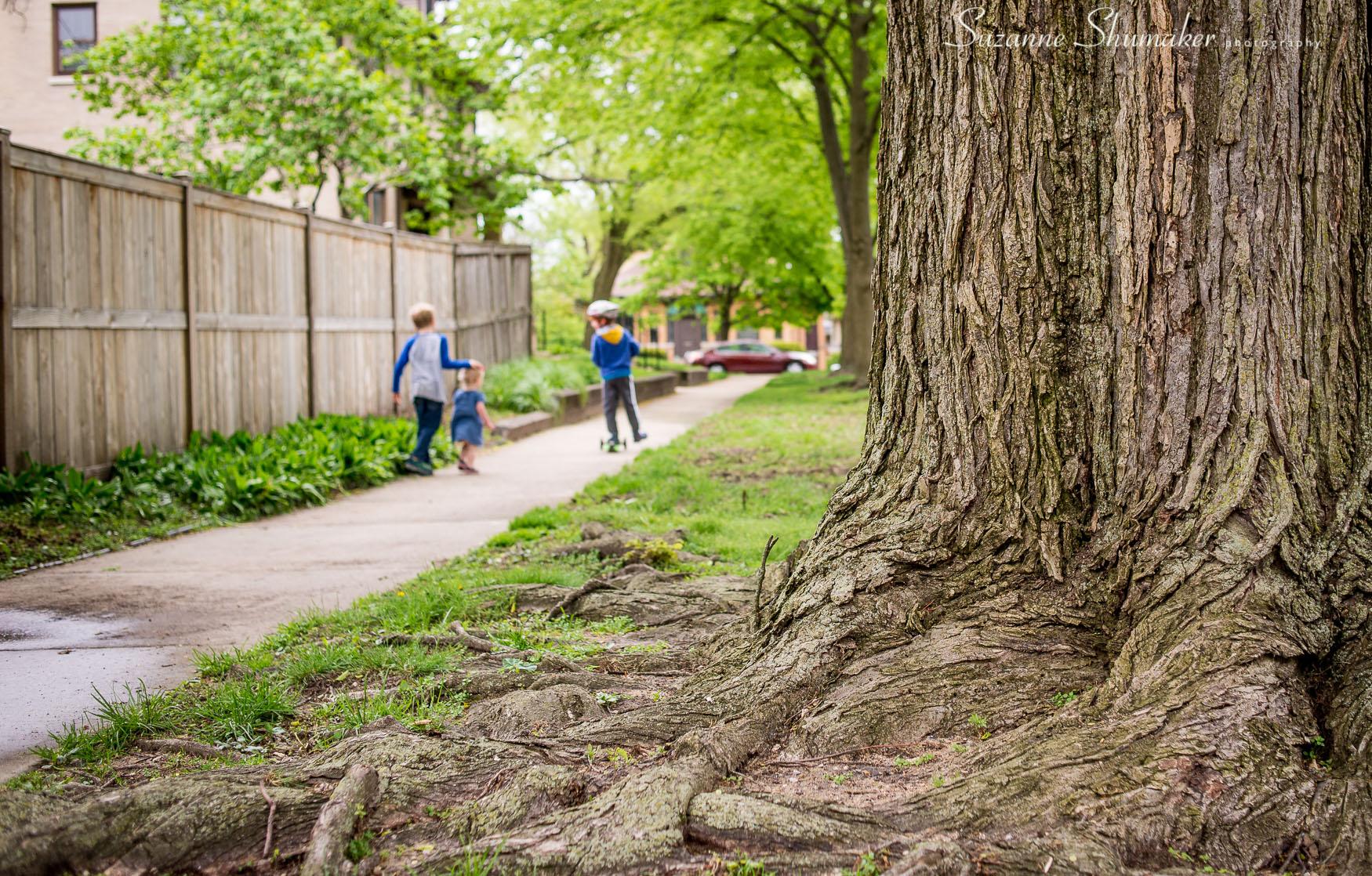 Evanston is a Tree City !