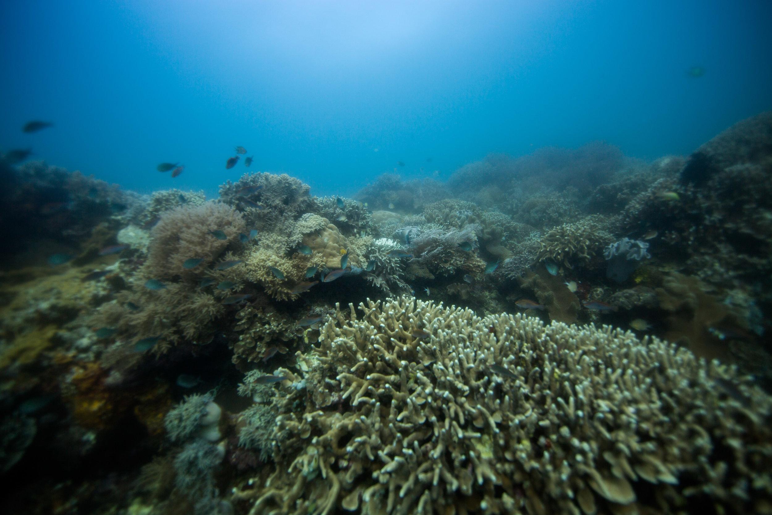 Rock Point dive site, Apo Island