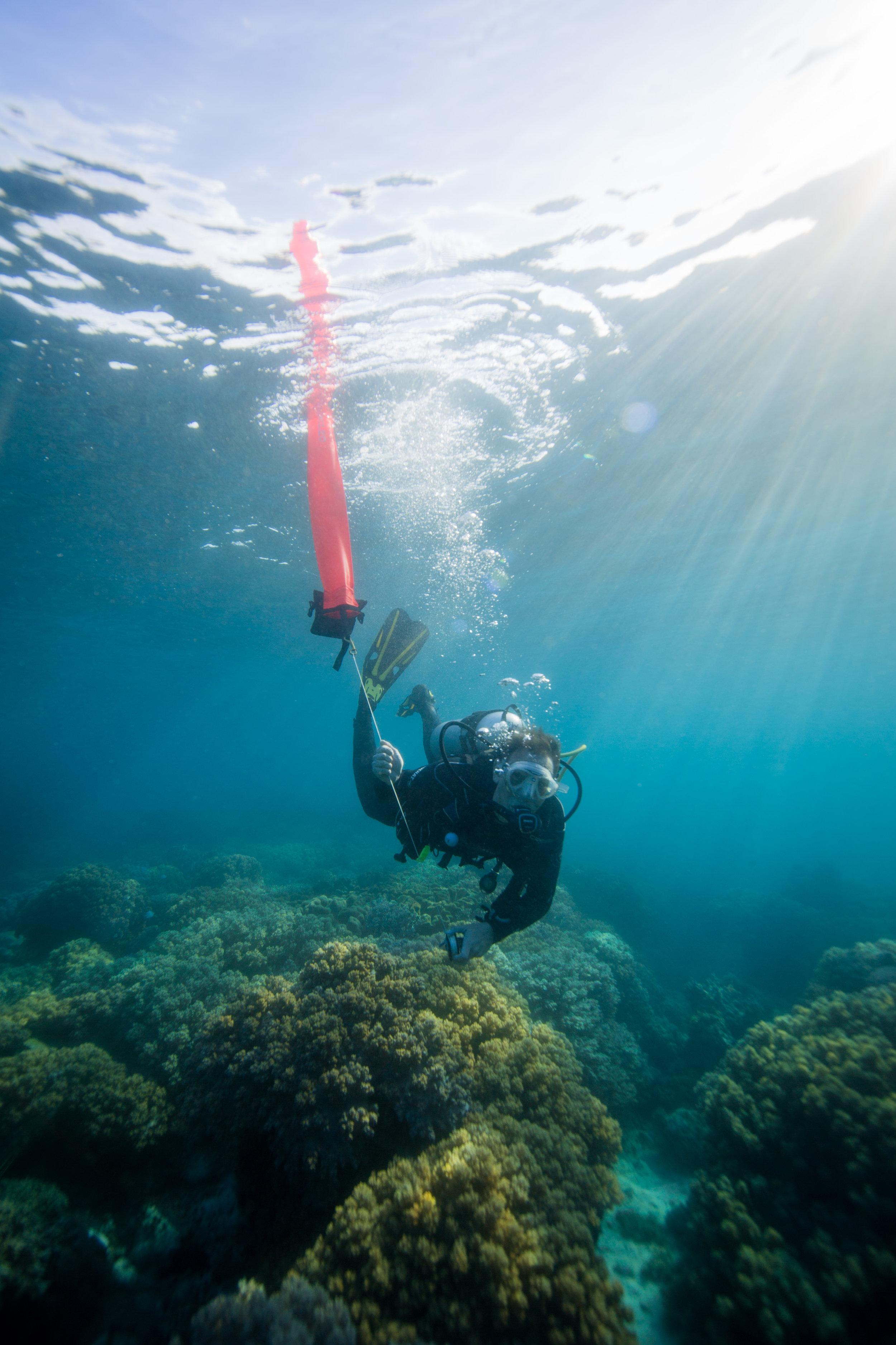 Laurent Martin, one of Jerome's dive mentors from Plongeurs du Monde Association (France)