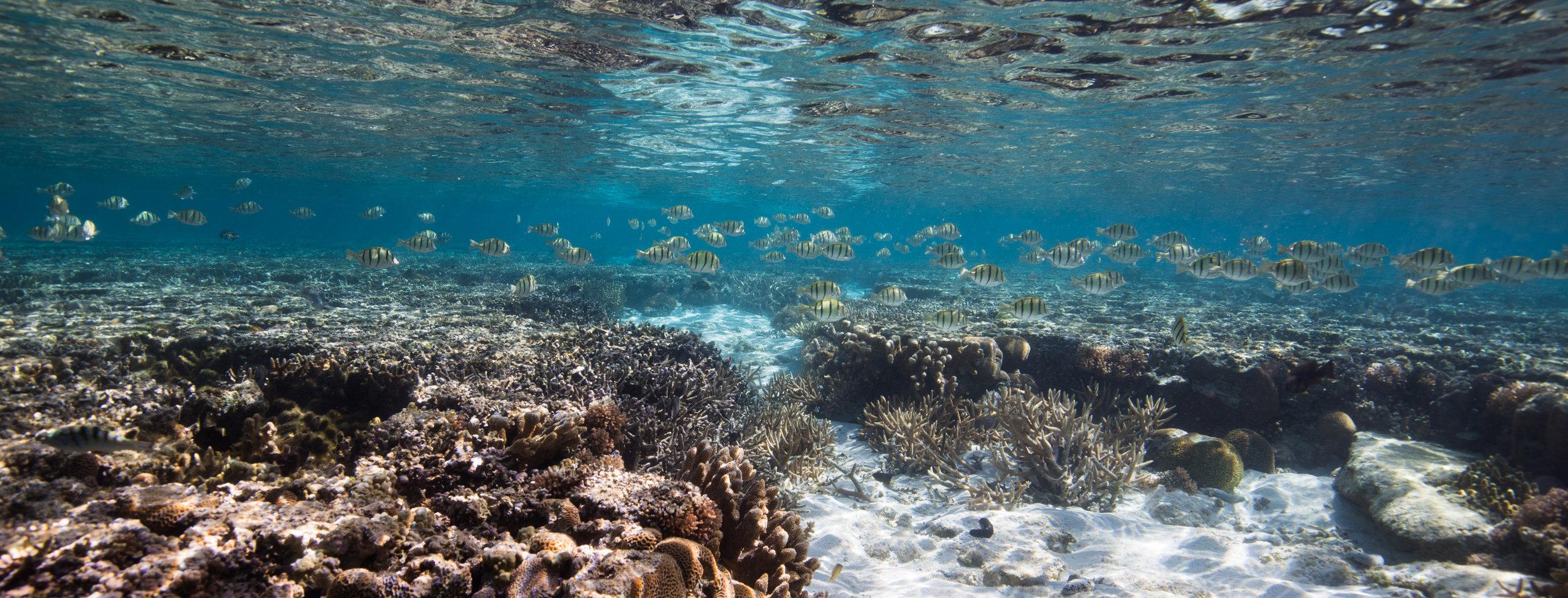 Great Barrier Reef, July 2017.