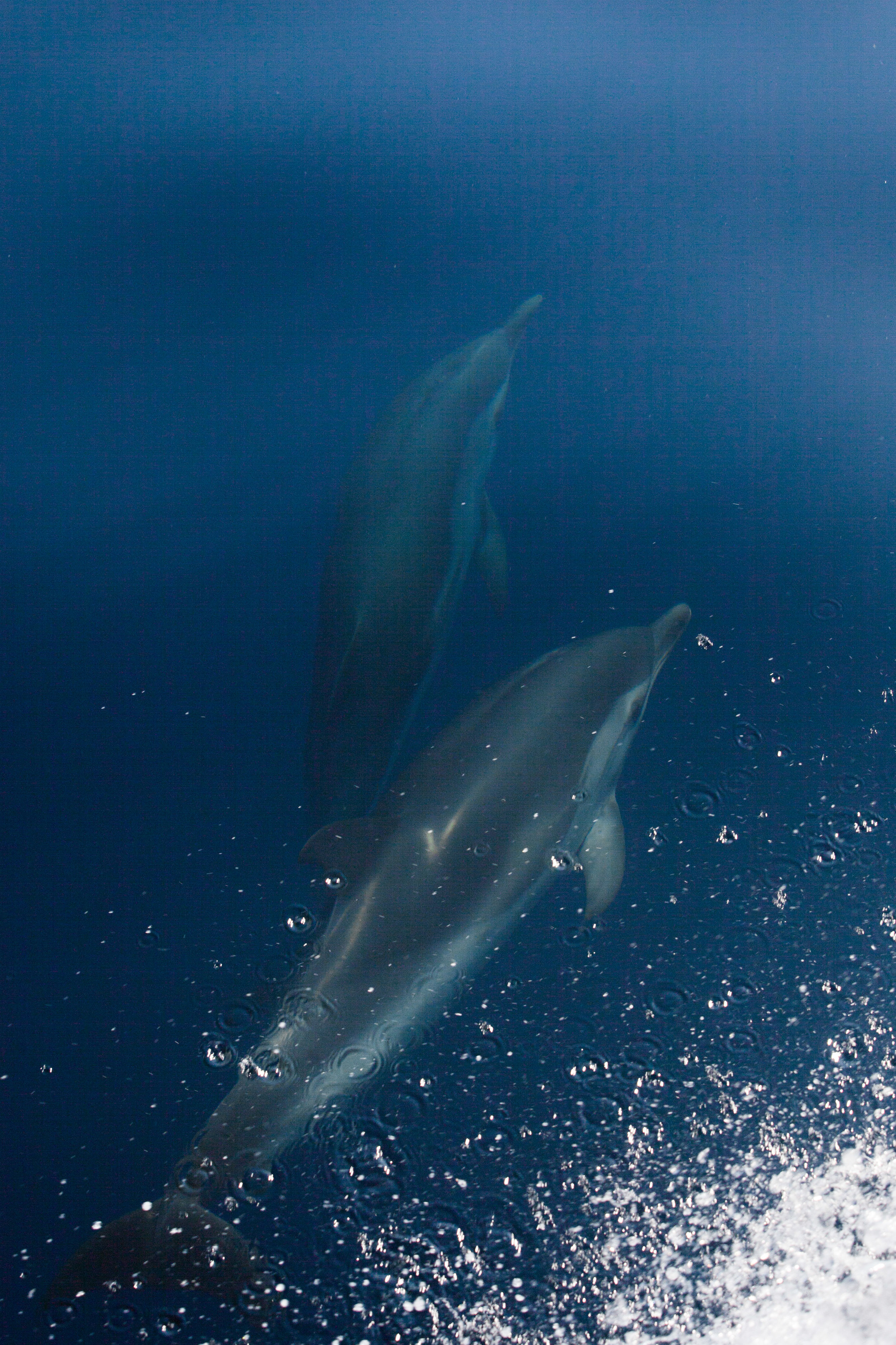 After departing Sanremo, we had a sighting of striped dolphins.