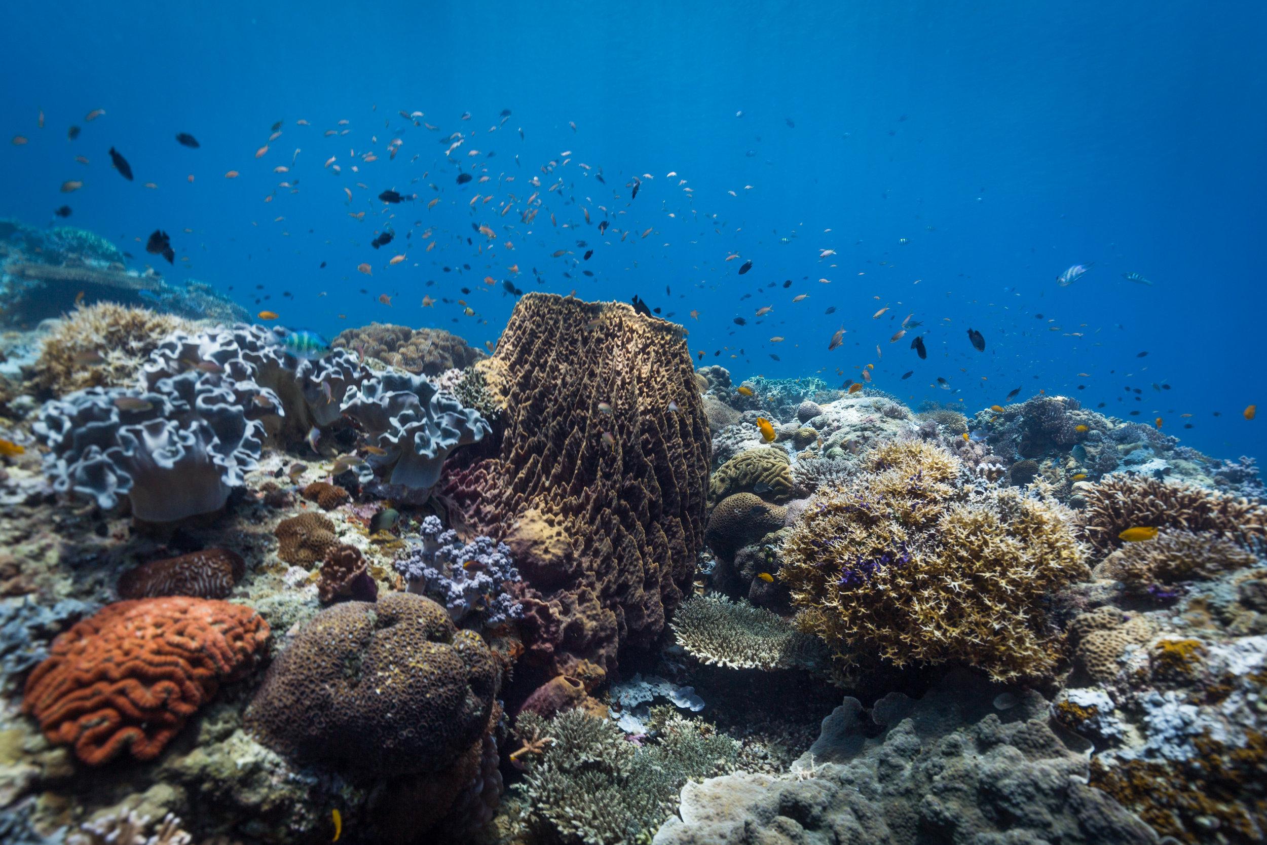 A coral garden from Danjugan Island, Philippines.
