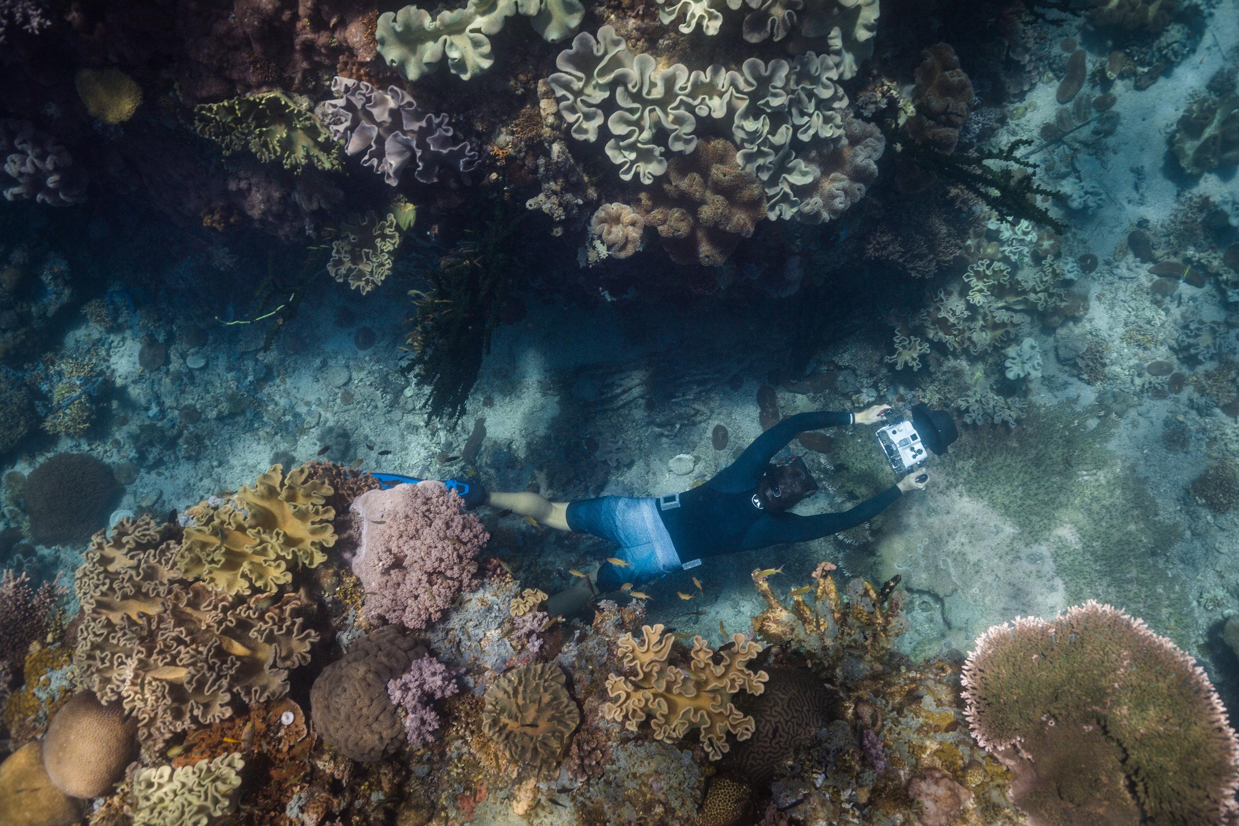 The brilliant underwater coral gardens of Limasawa, Philippines.