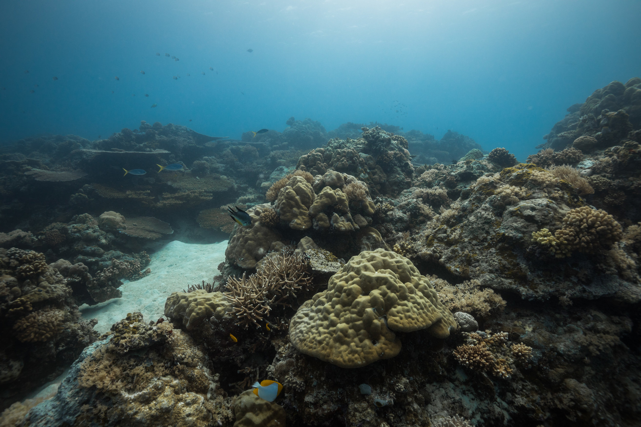 Although we arrived at a time when the visibility was low for what we hoped for filming, we marvelled at the beauty of Palau's underwater world.