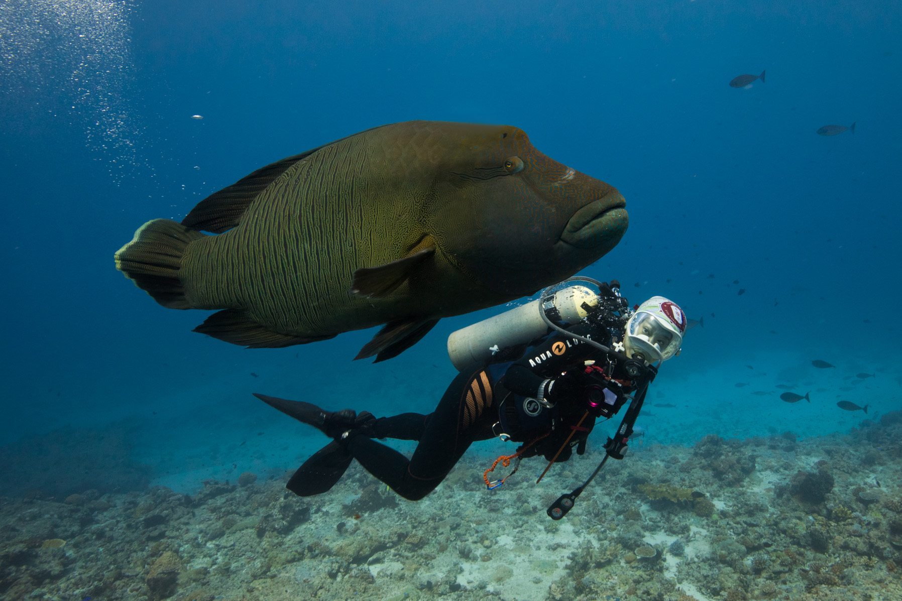 While in Palau, we took this photograph for wildlife campaigner Sharon Kwok, who is leading a campaign to save the hump-head wrasse in Hong Kong.