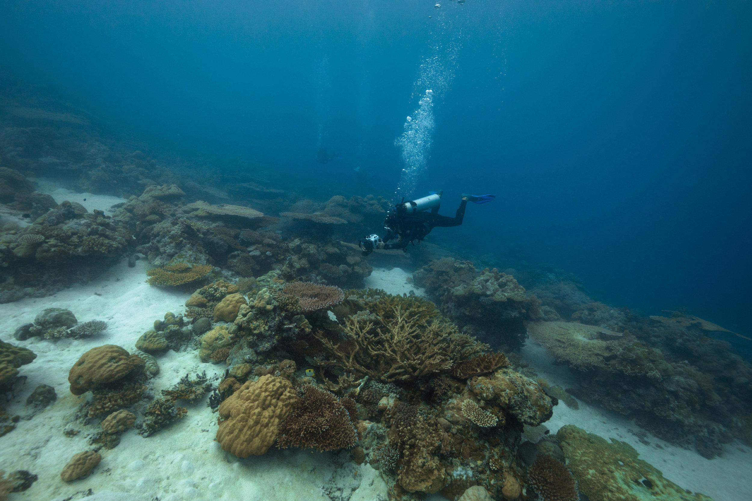 Co-Director Danielle Ryan filming a coral garden.