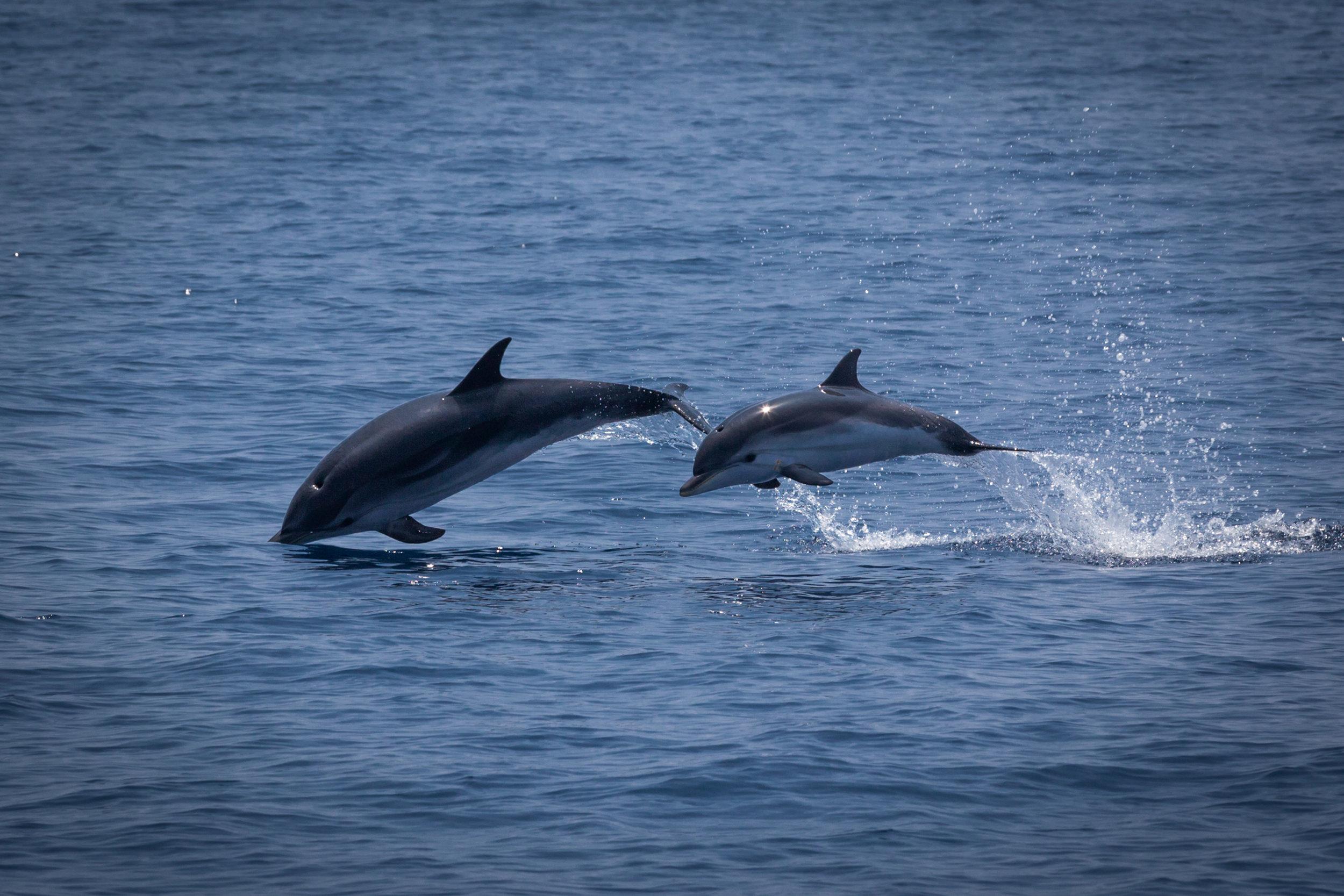 Dolphins ©Danielle Ryan, Bluebottle Films.jpg