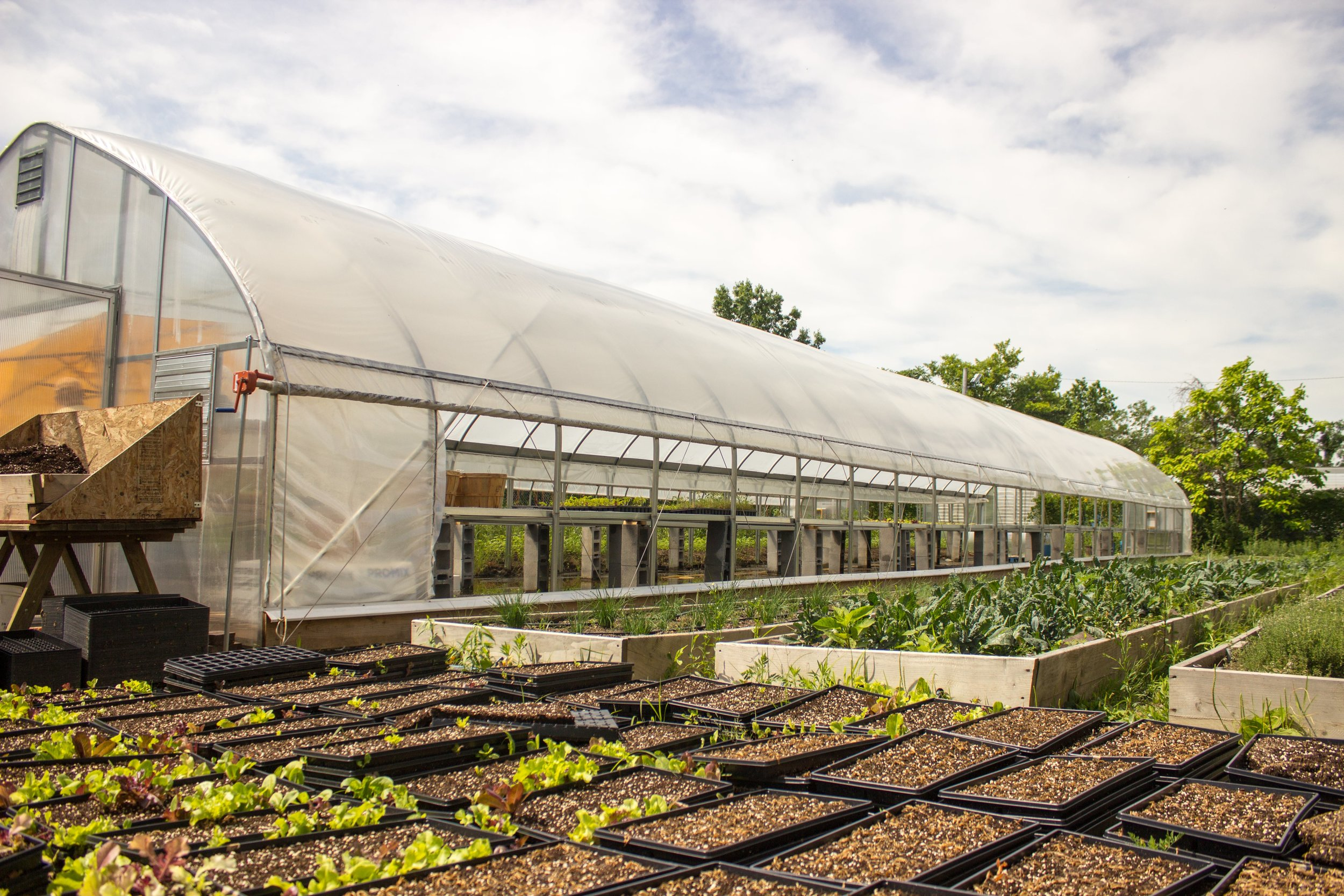 Greenhouse picture.jpg