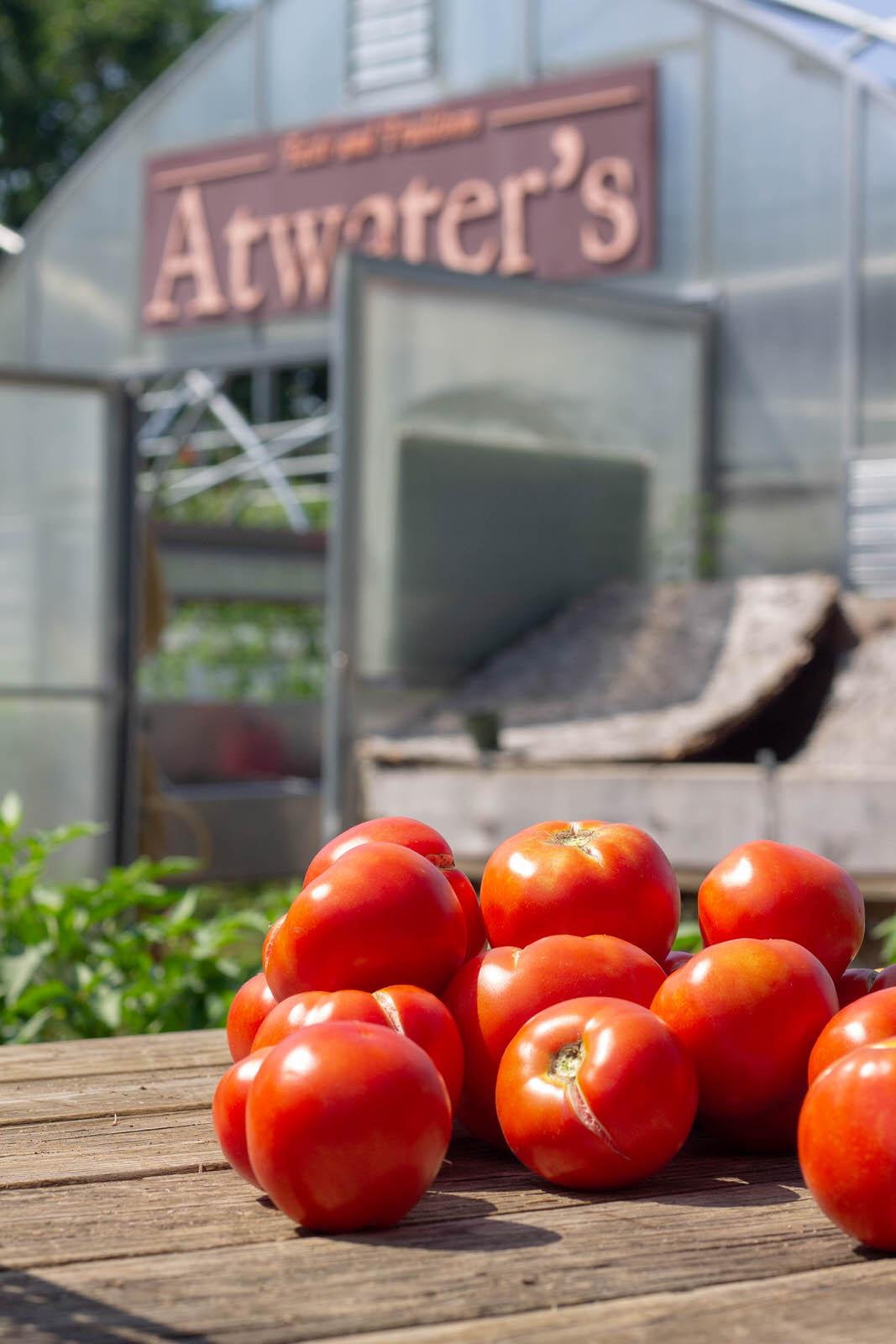Tomatoes at the BK Farm.jpg
