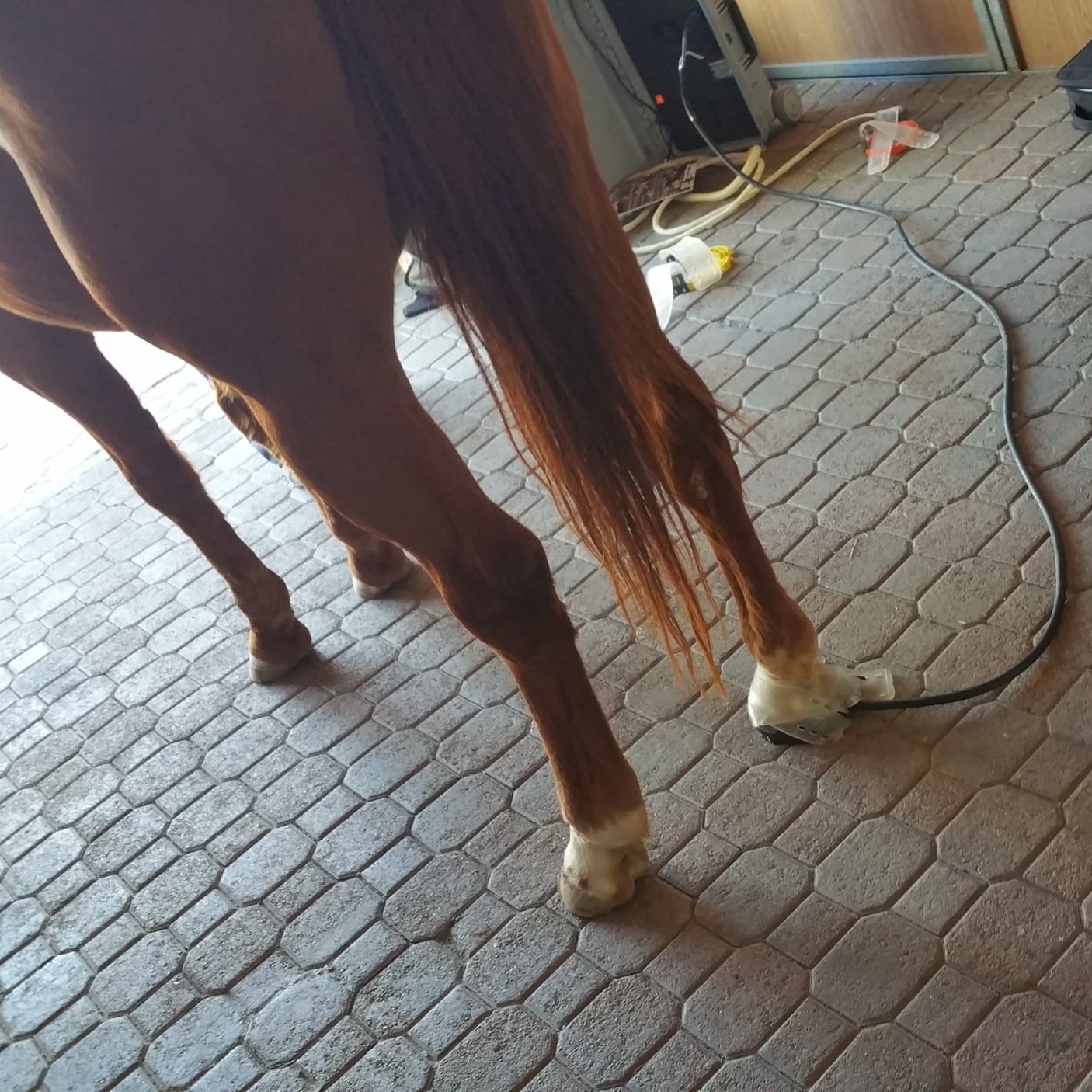 Hoof Pro with 10 ft lead connected to EquiPulse