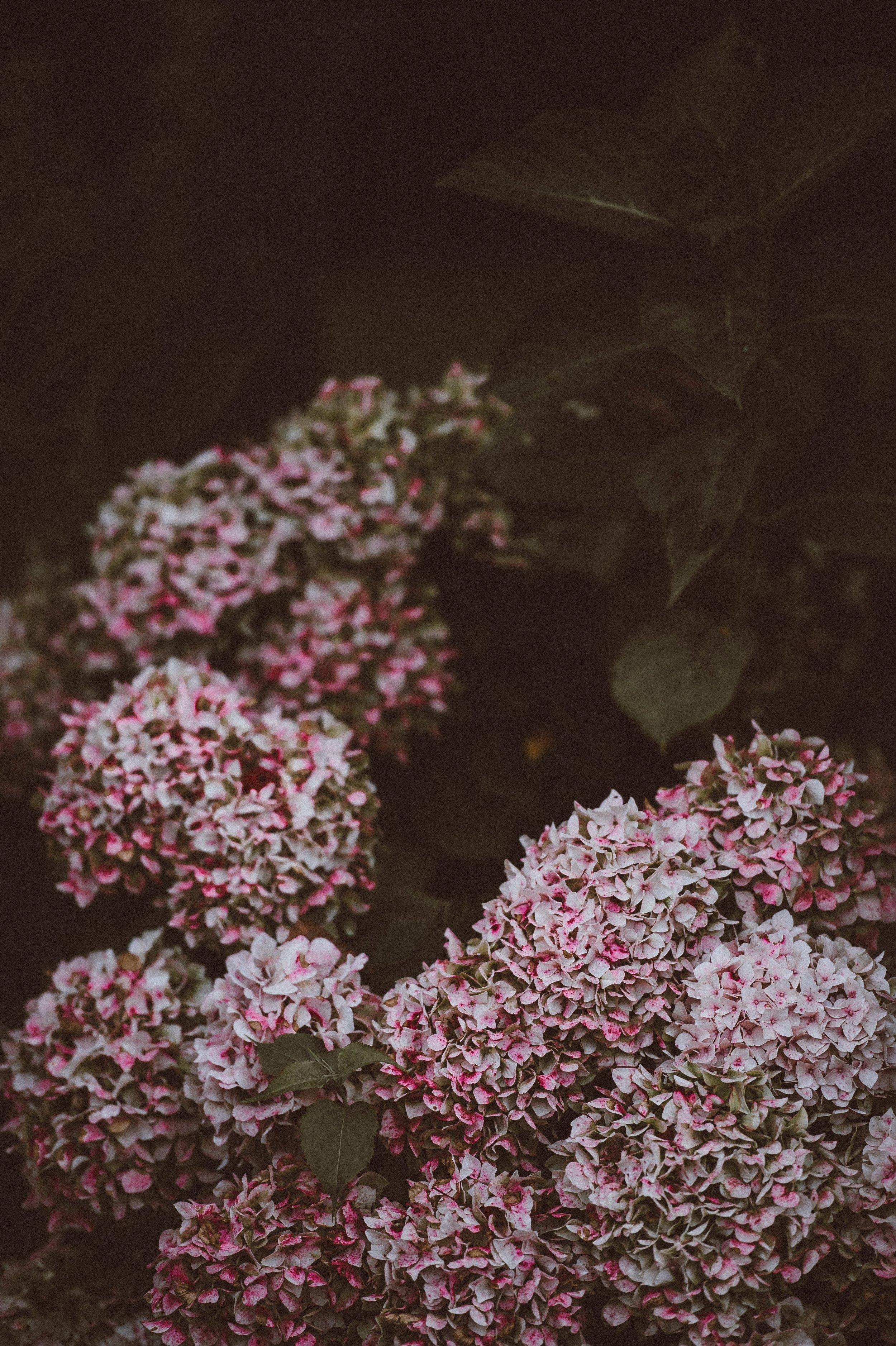 flowers dark garden
