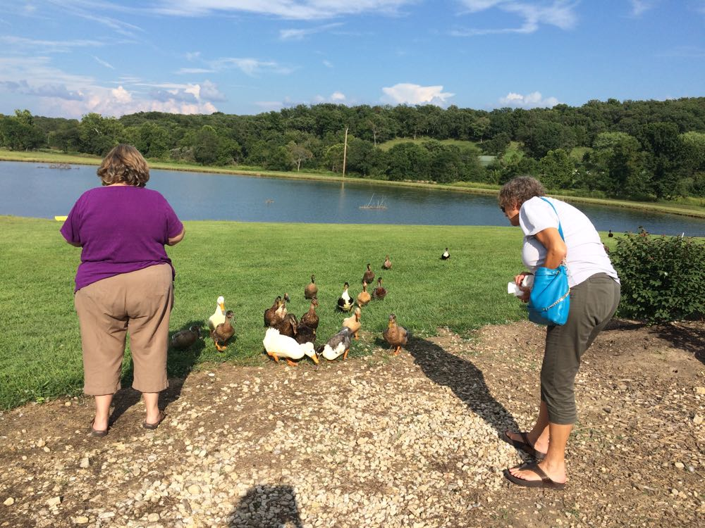 Gail Lee, left, and Margaret Ronzio share leftover french fries with the waiting ducks.