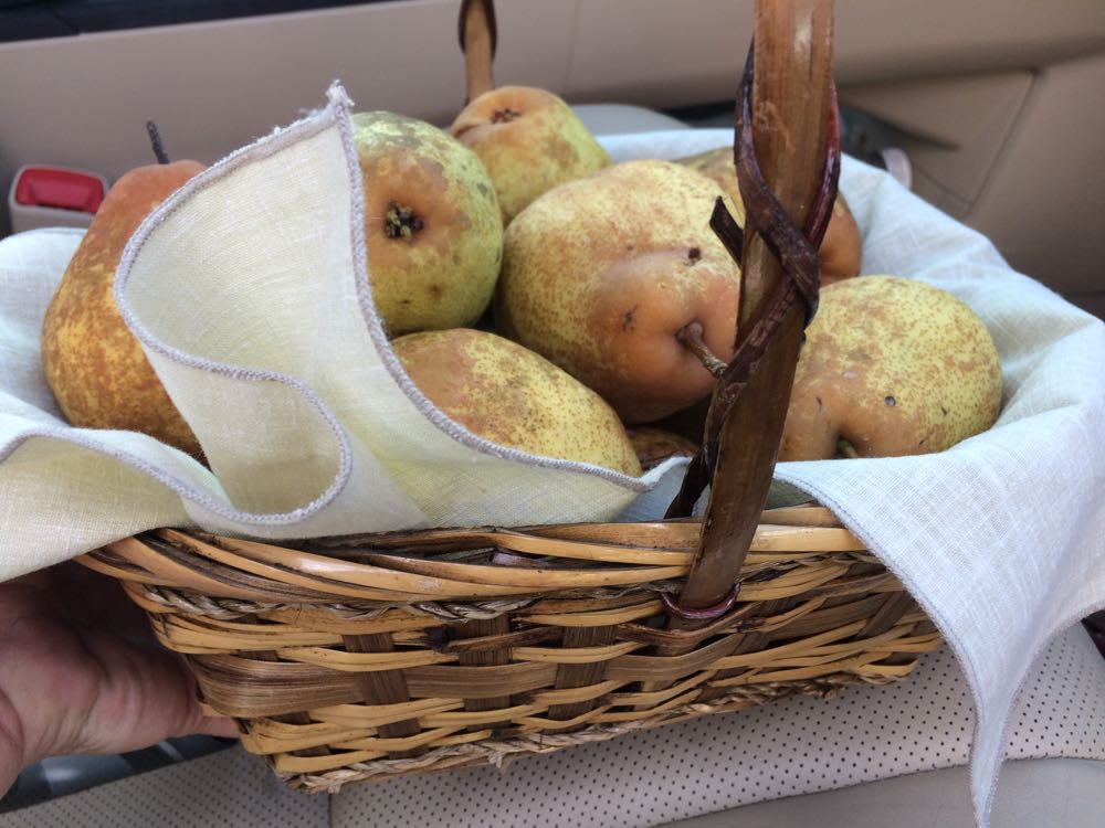 Locally-grown pears in a napkin-lined gift basket ready to be delivered.