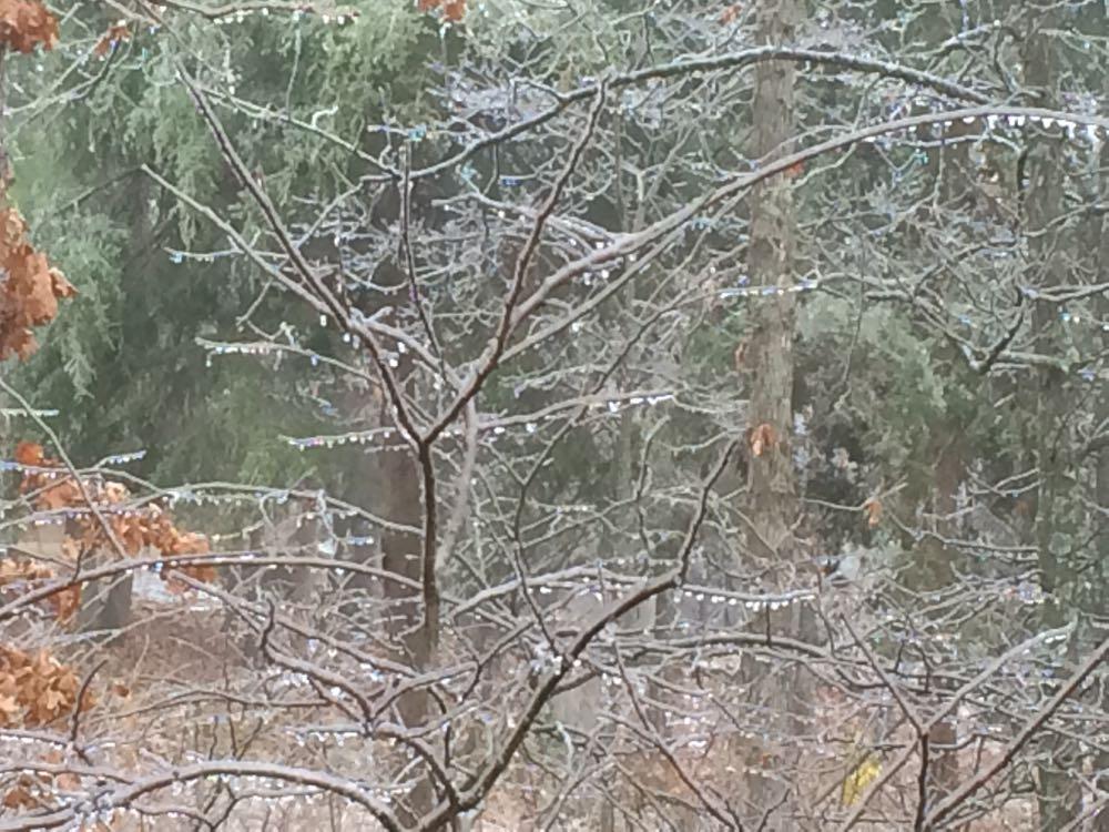 Ice storm January 14, 2017 is beautiful at Bluebird Gardens.
