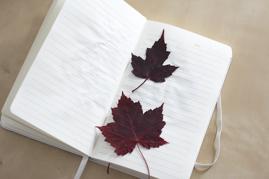 Dry fall leaves between book pages.