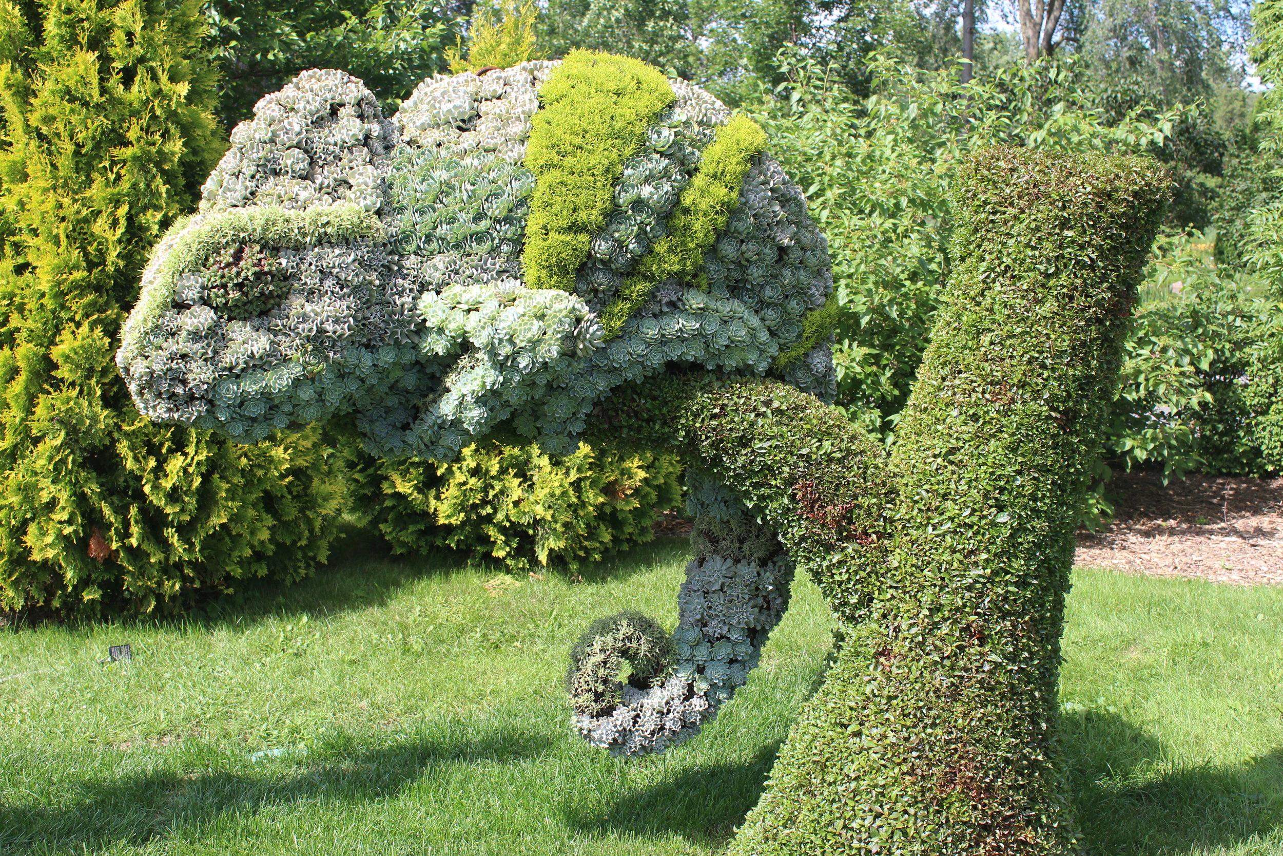 succulent chameleon.jpg
