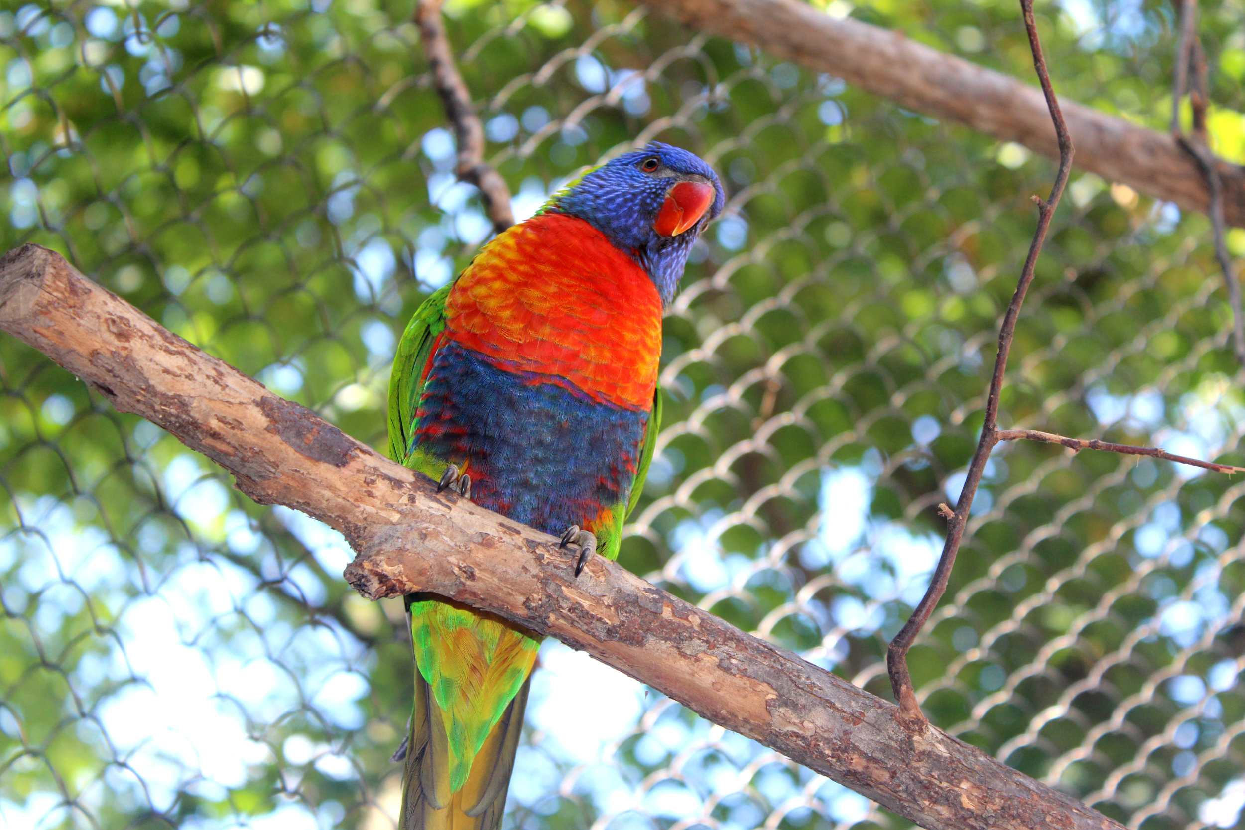 zoo de grandby parrot multicolored.jpg