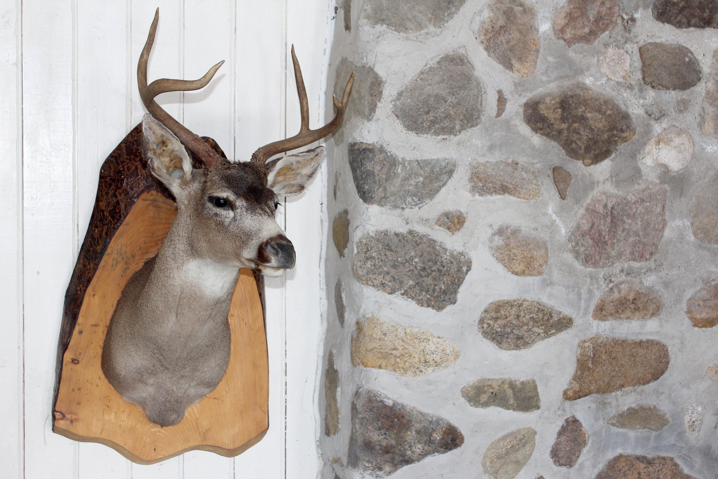 deer head hunting trophy cabin quebec canada.jpg
