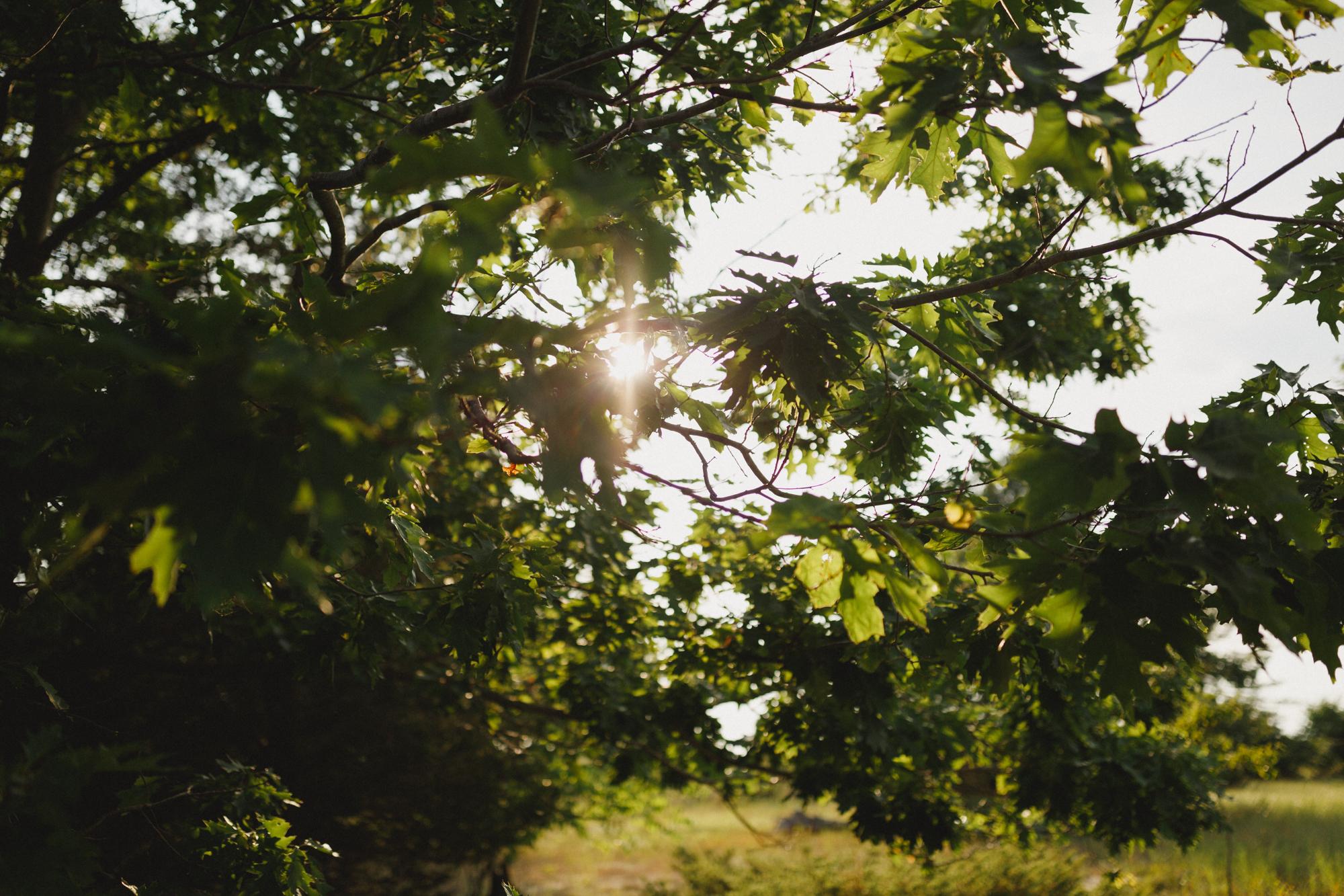 www.sarakrebsbach.com_rosy mound-44.jpg