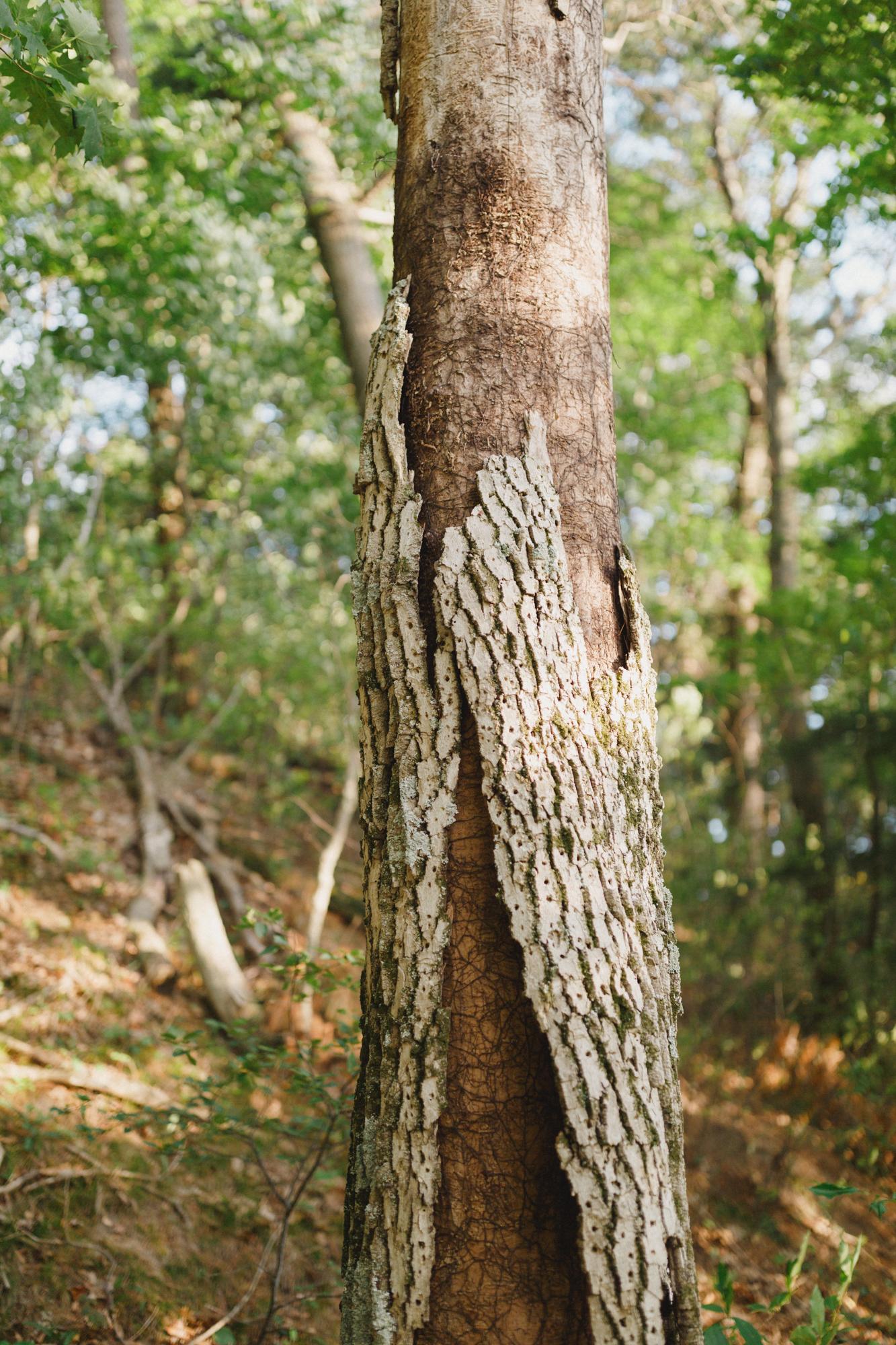 www.sarakrebsbach.com_rosy mound-52.jpg