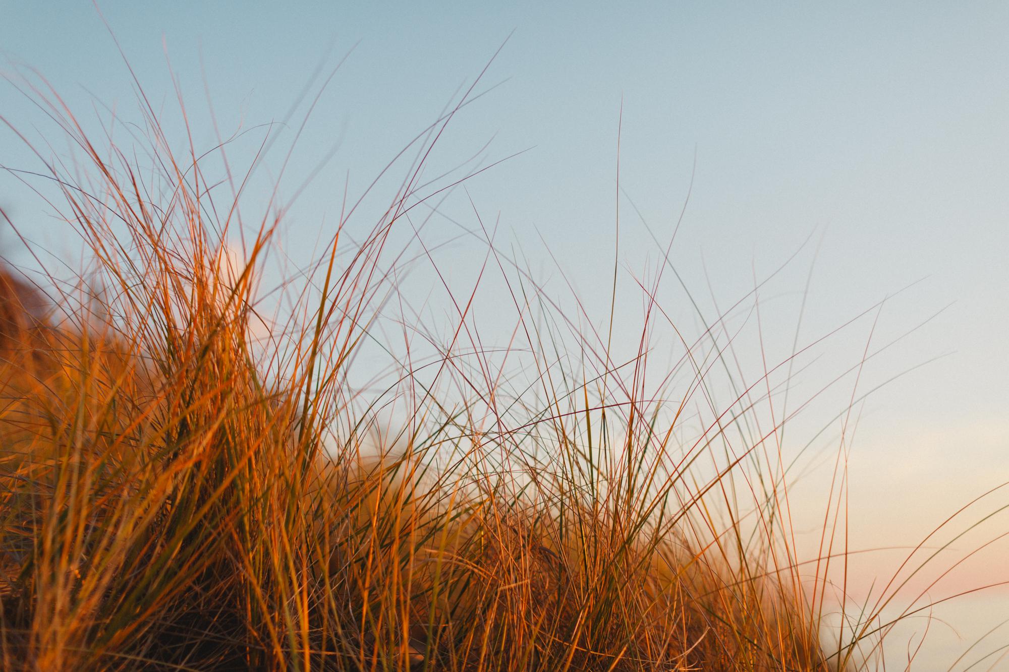 www.sarakrebsbach.com_kirk park beach-14.jpg
