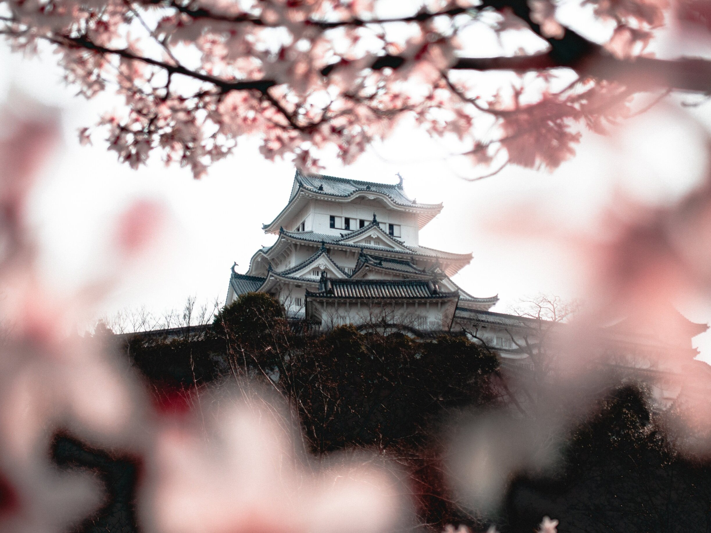 We rented bikes for super cheap and rode around Himeji Castle! Oh yeah, and we were there for Sakura (cherry blossom) season!
