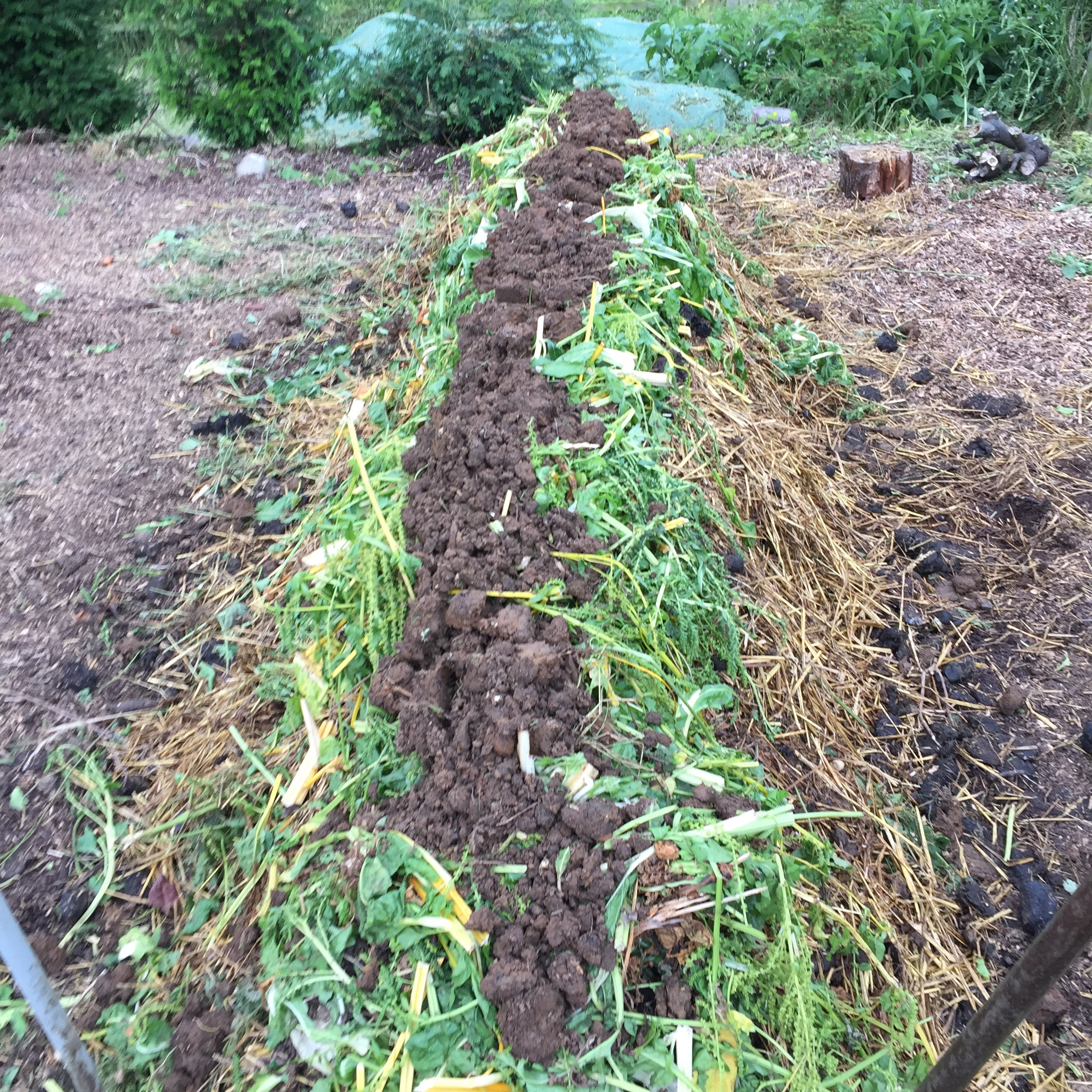 D. Layer of Fresh Manure