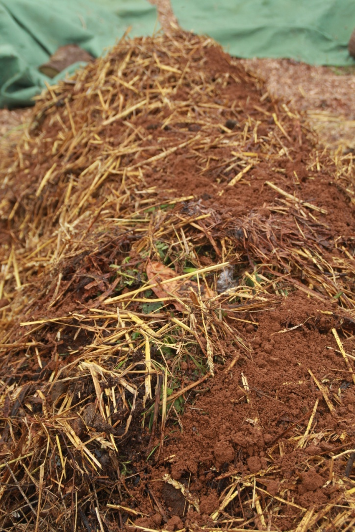 E. Layer or Straw and Old Compost