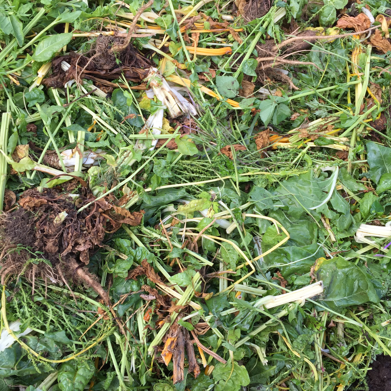 8. Fresh Weeds